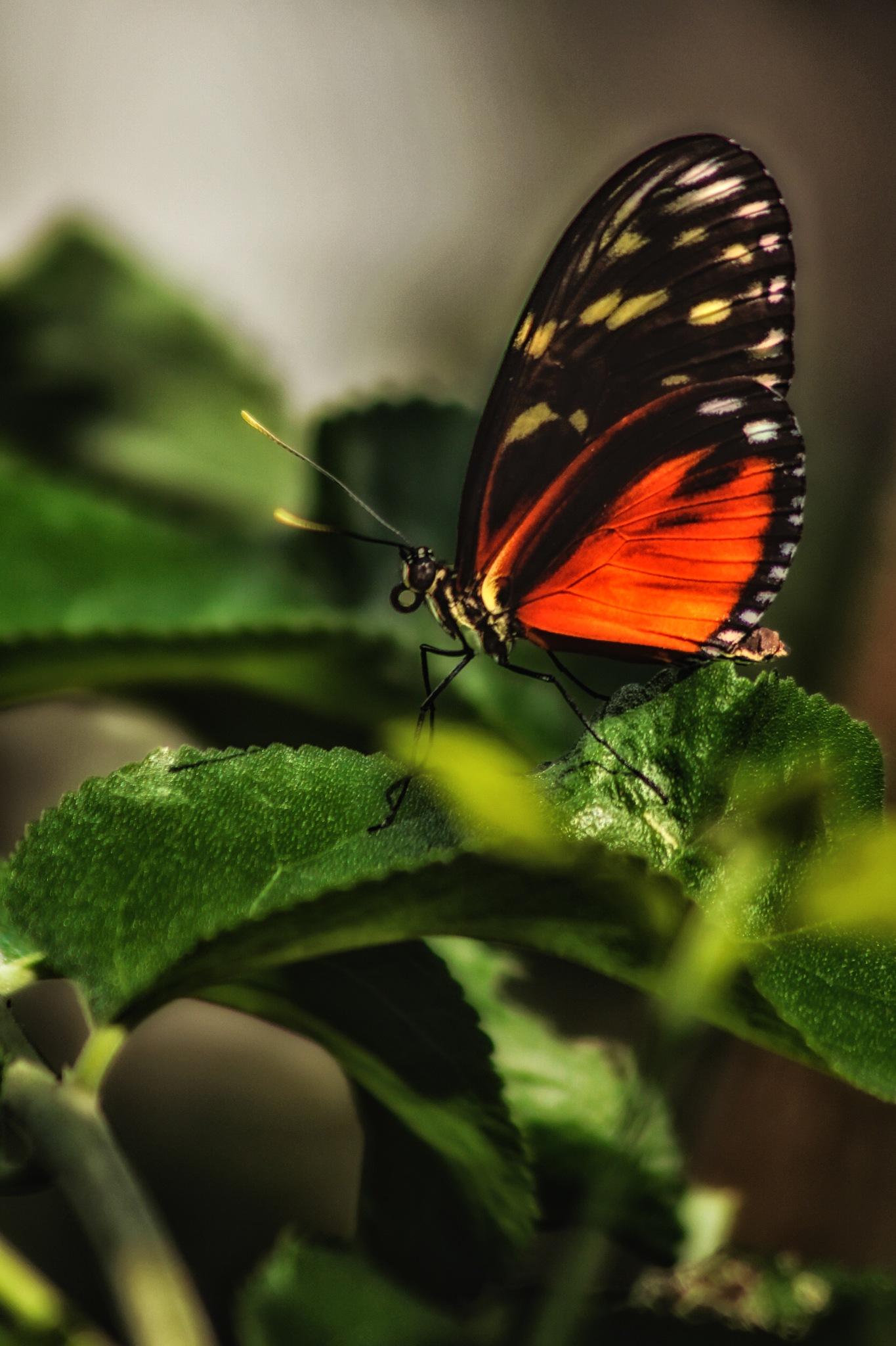 Butterfly by David Walters