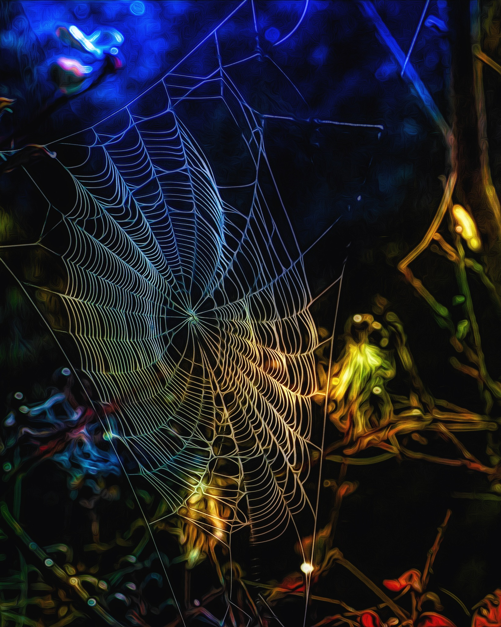 Real Spider Web by David Walters