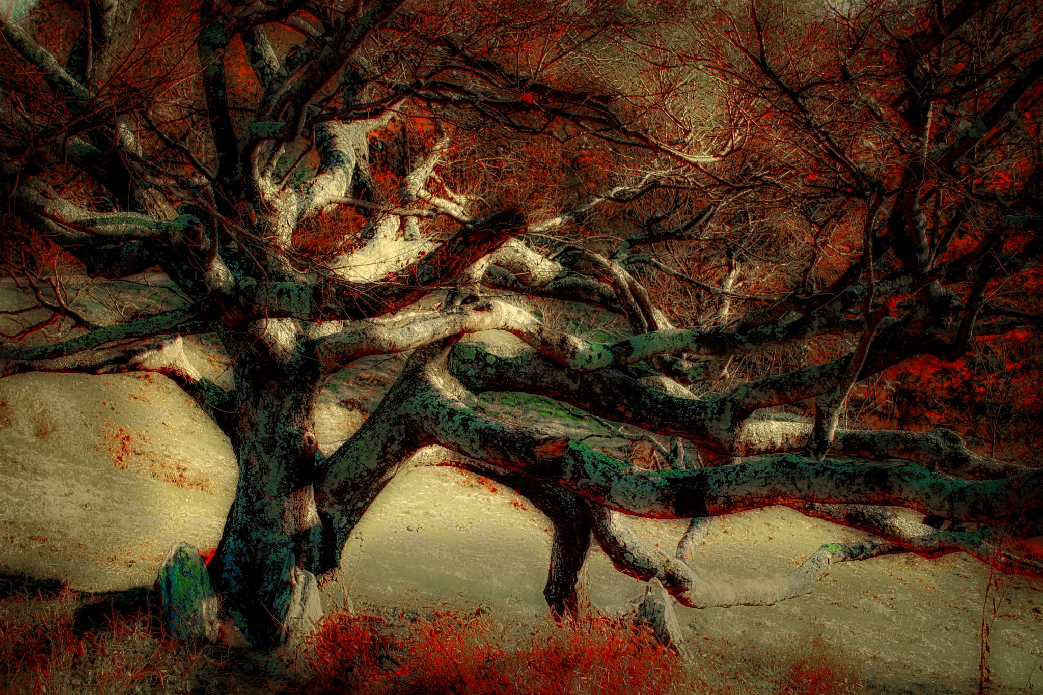 Tree of Life by David Walters