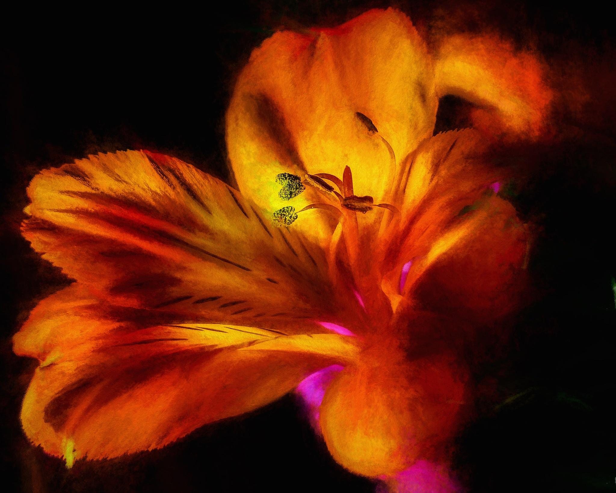 Digital Art Flower by David Walters