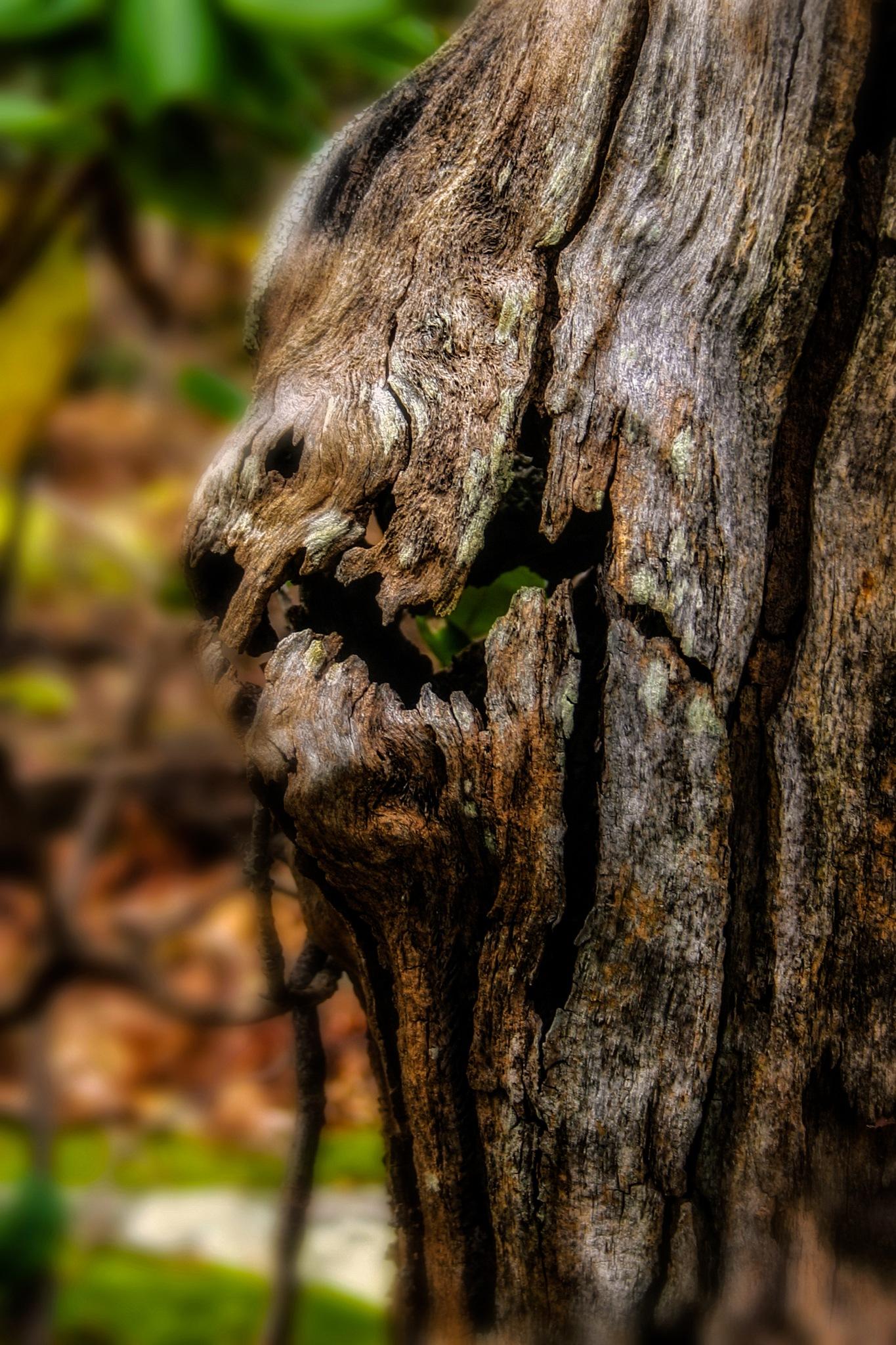 Swamp Creature by David Walters