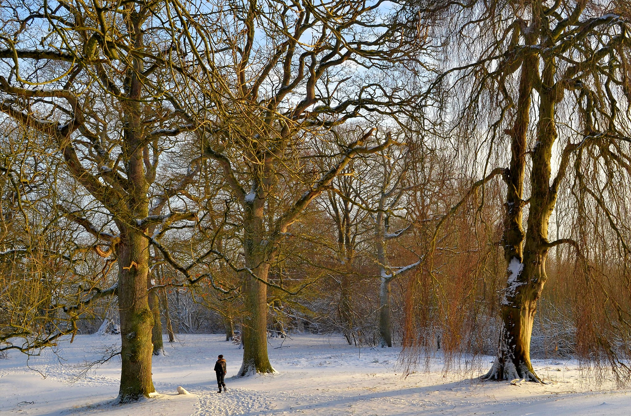 Photo in Landscape #moesgaard #aarhus #denmark #winter #snow #trees