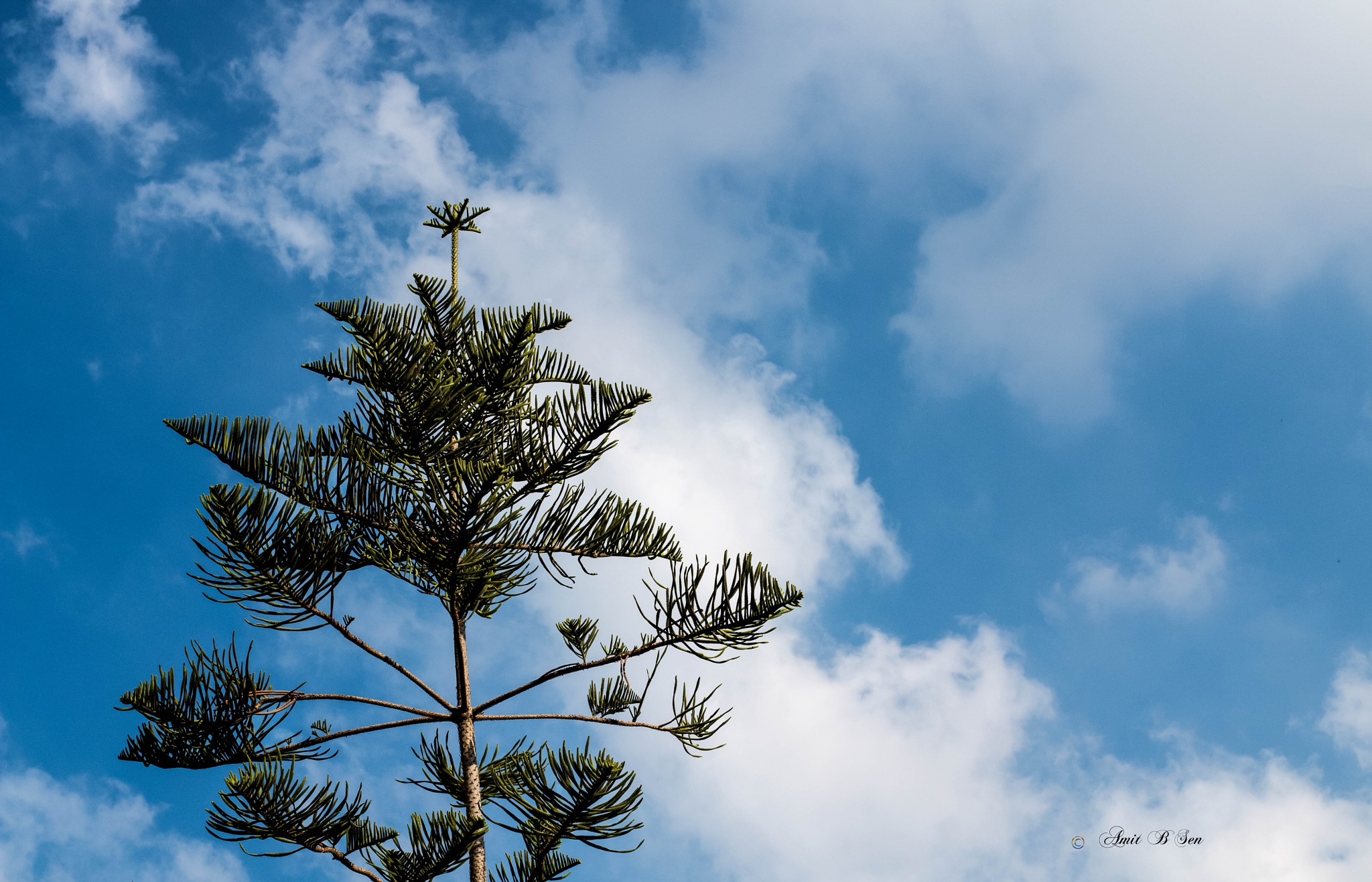 Towards sky by Amit Baran Sen