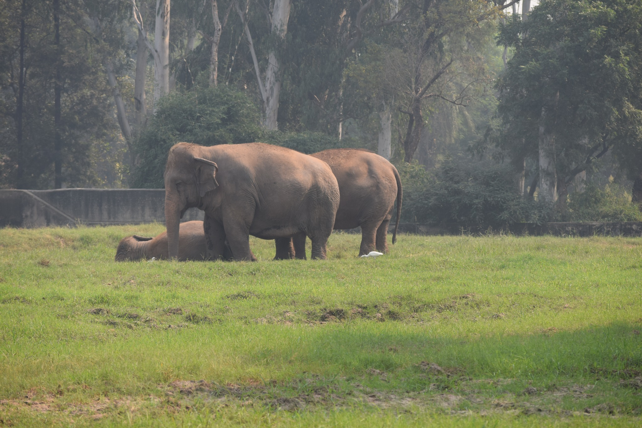 Elephants by Sumit Jhamb