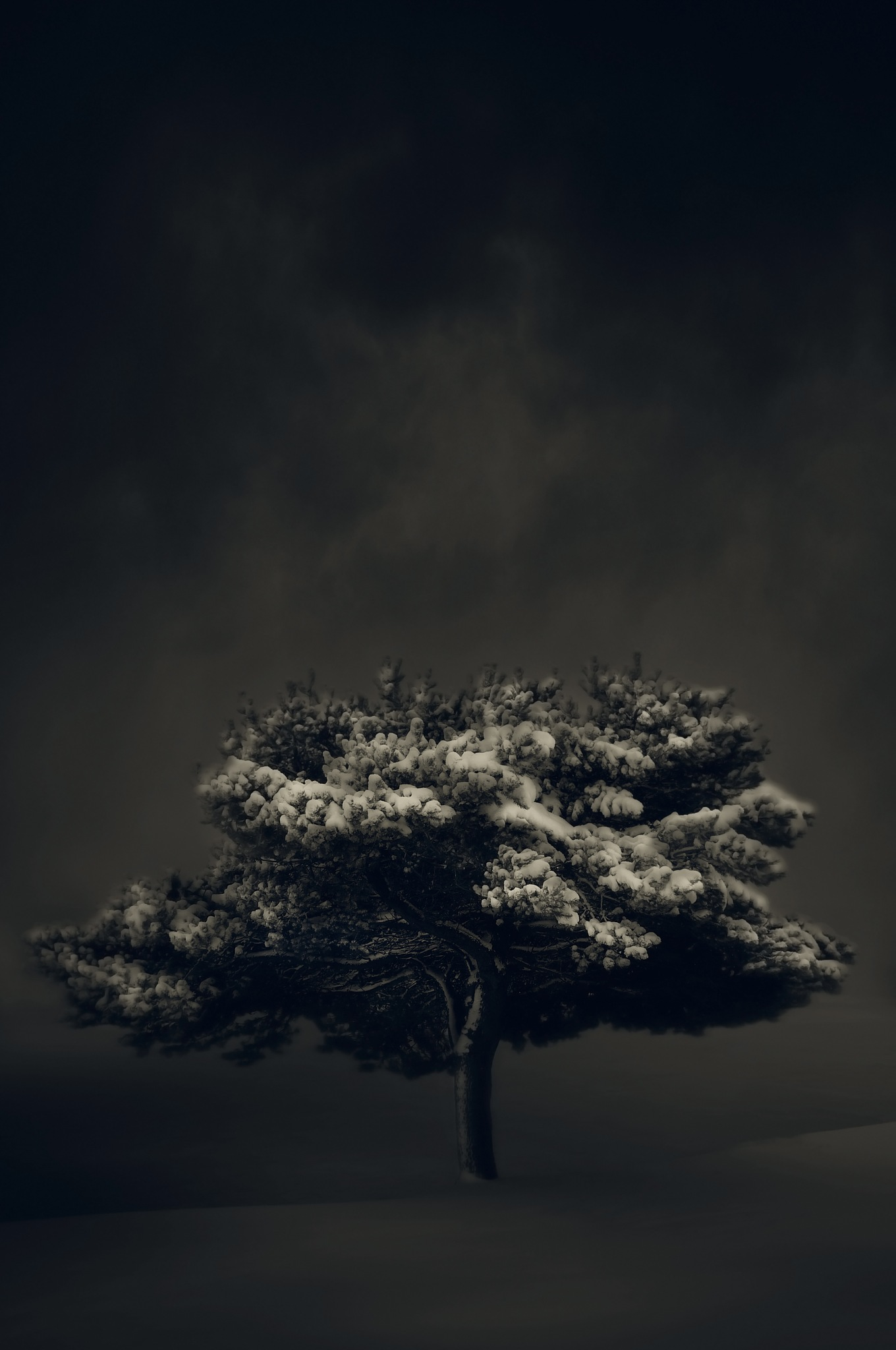 Lone Tree by Thomas Sikora