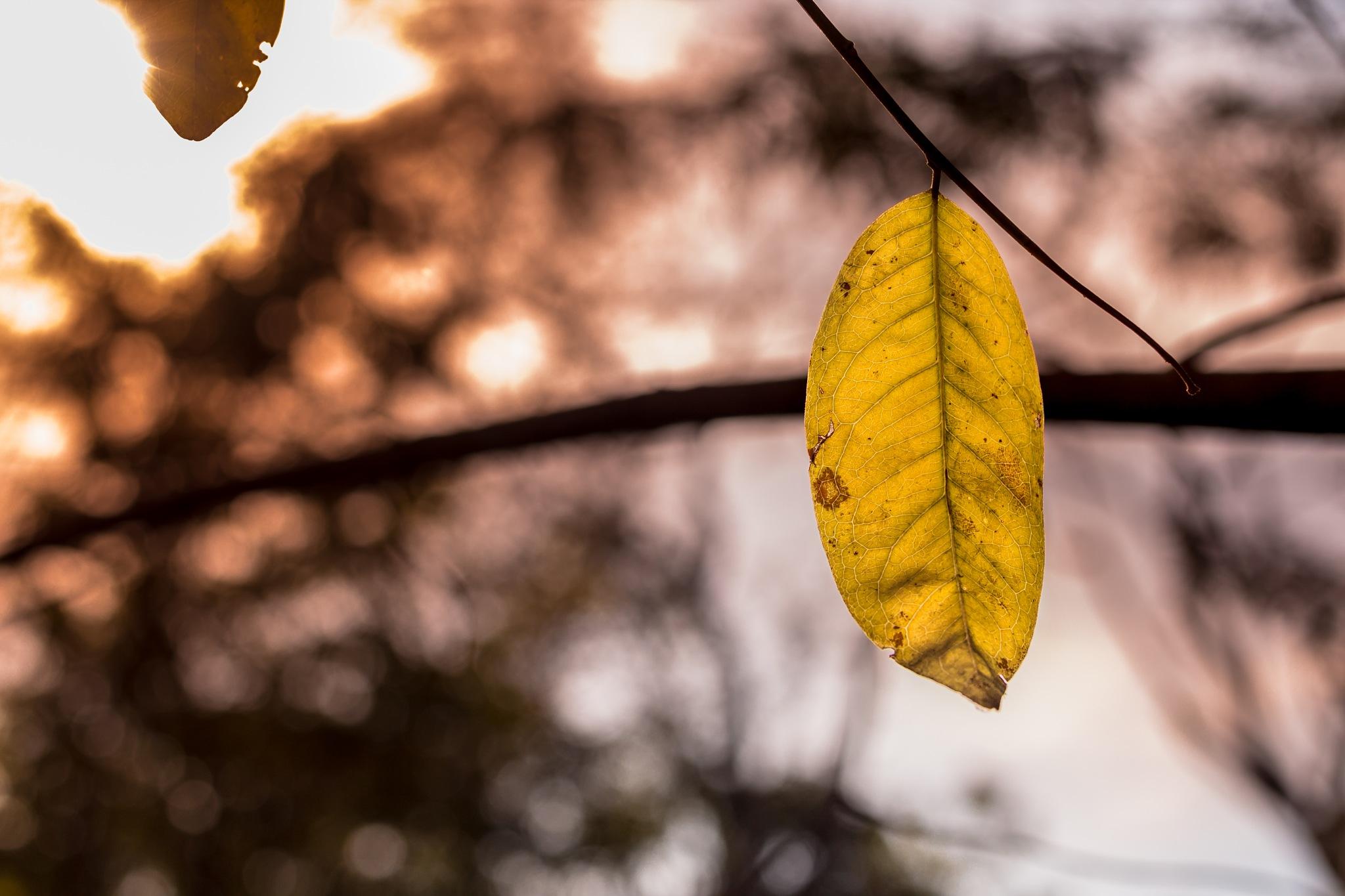 Folha de outono by Marcelo Lopes Lima