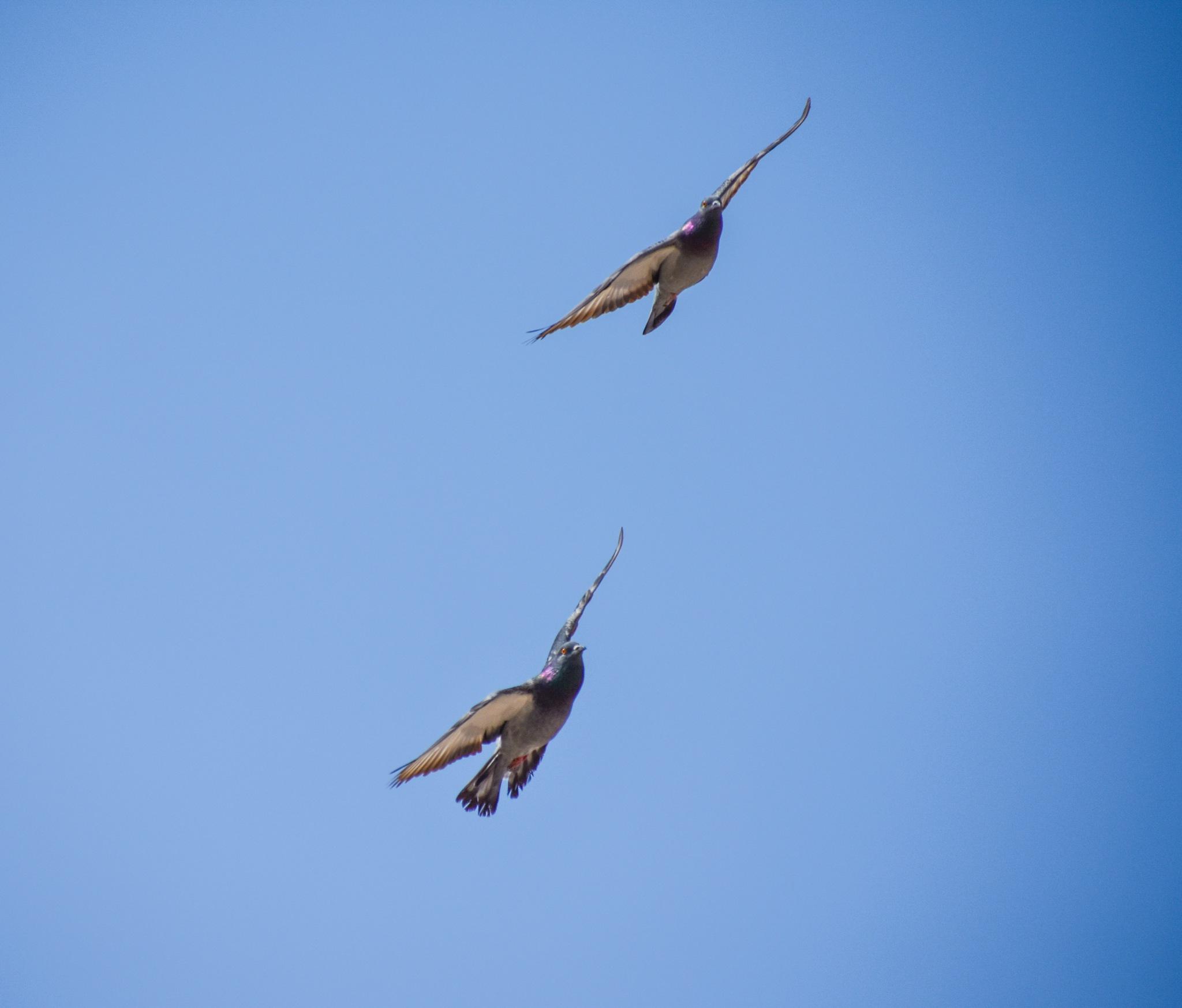 Fly by Mohamed ElHashmy