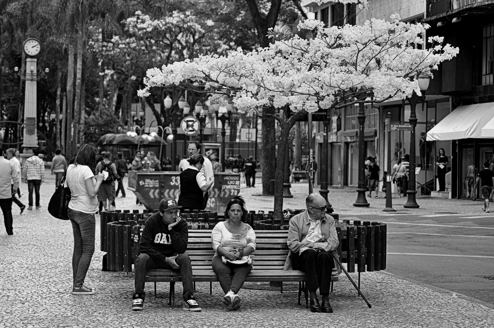 Ruas de Curitiba by José Evaldo Suassuna de Oliveira