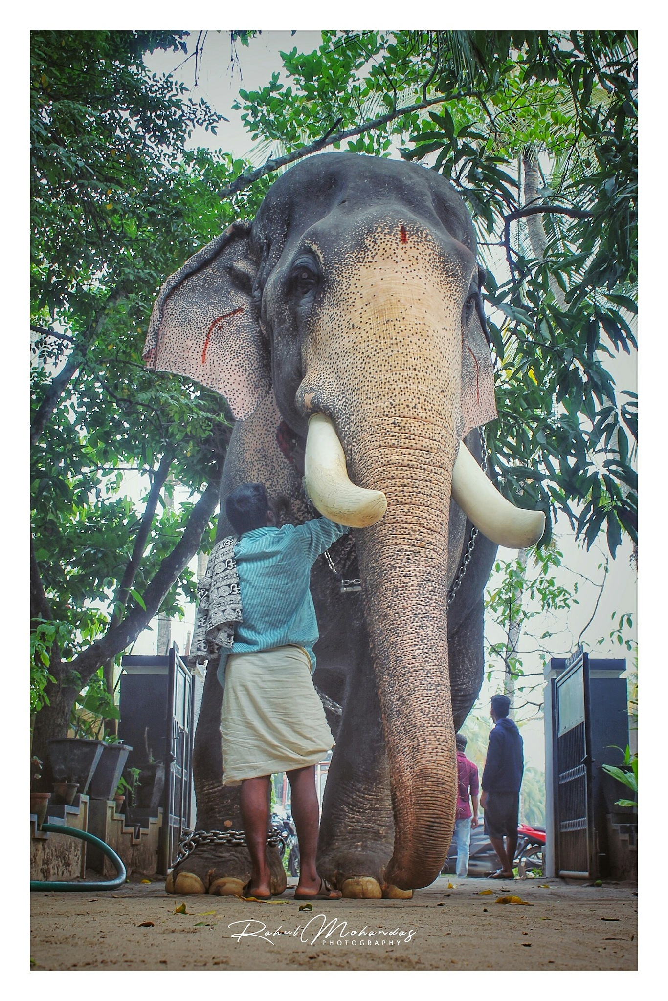 Elephant lover by Rahul Mohandas