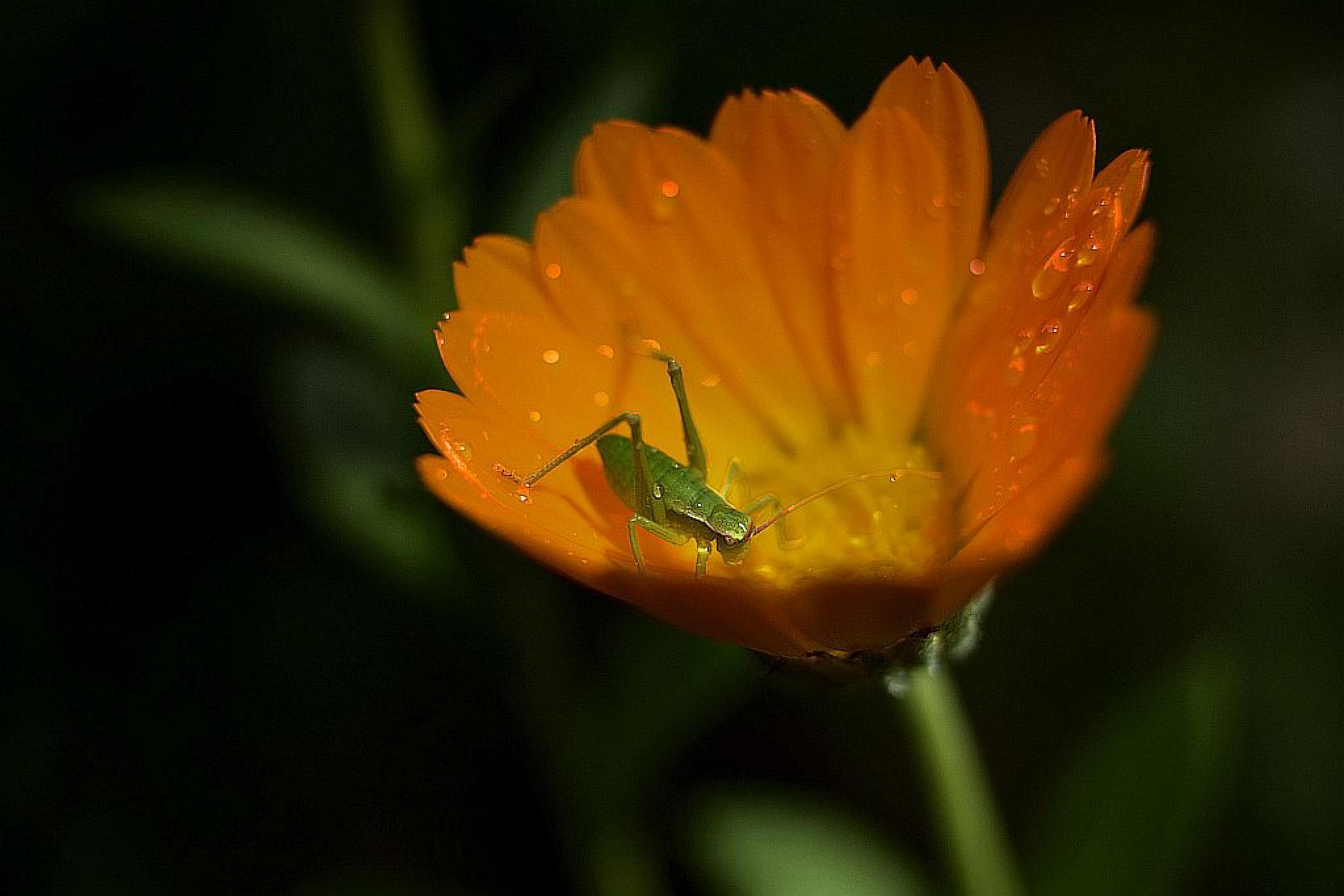 ın the orange by cemalsepici