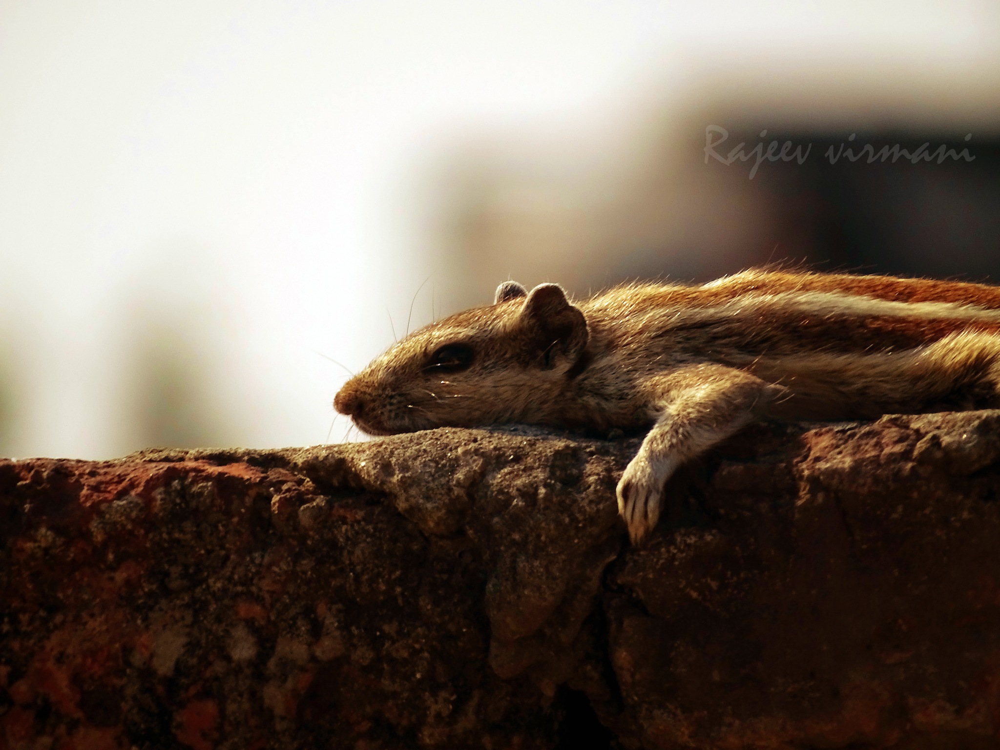 Resting by Rajeev