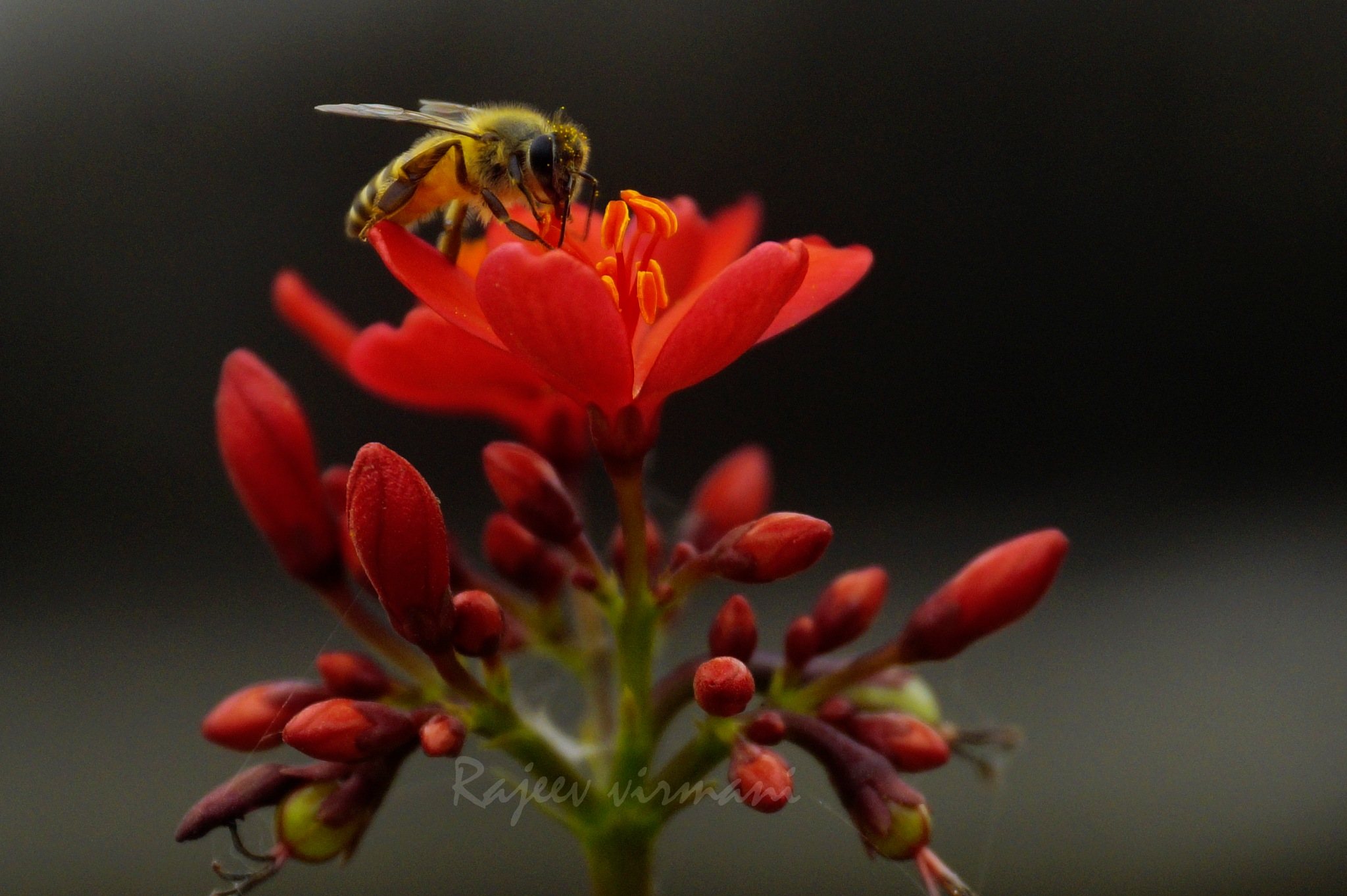 Busy Bee by Rajeev
