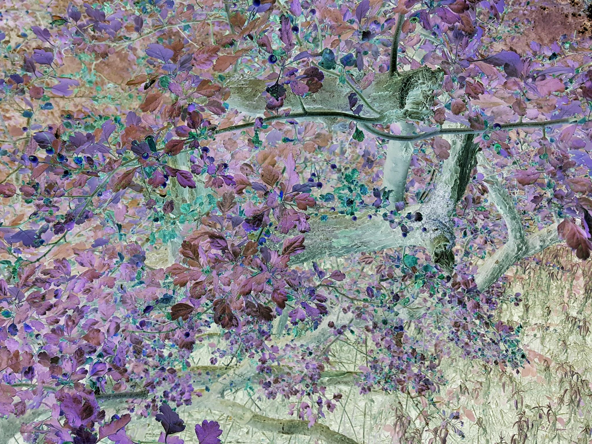 'Colorful Nature' by John Jack Dubajka