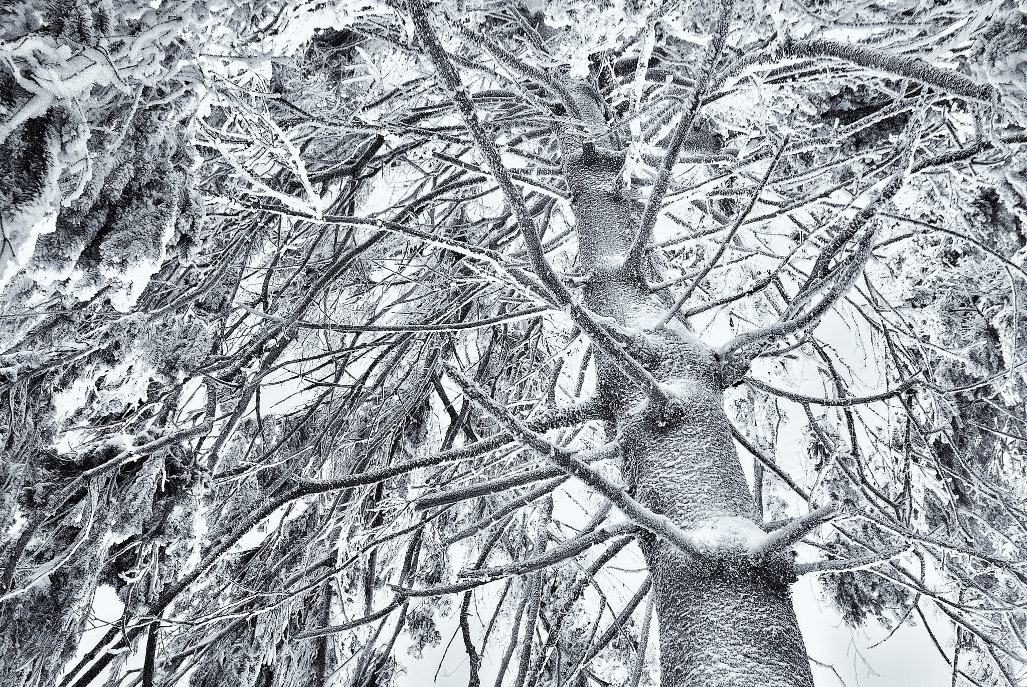 Clad in snow filigree by Jiri Ruzicka