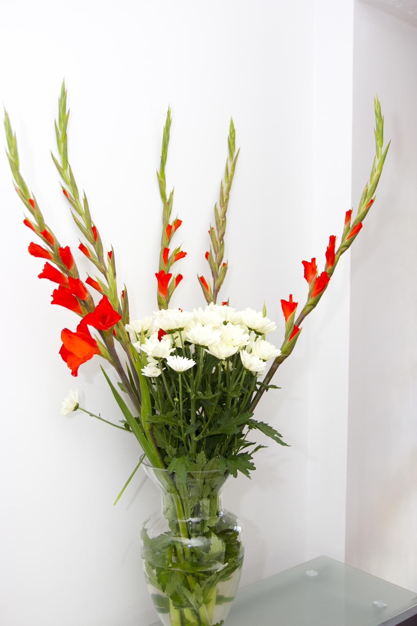 flower by Muhammad Khan