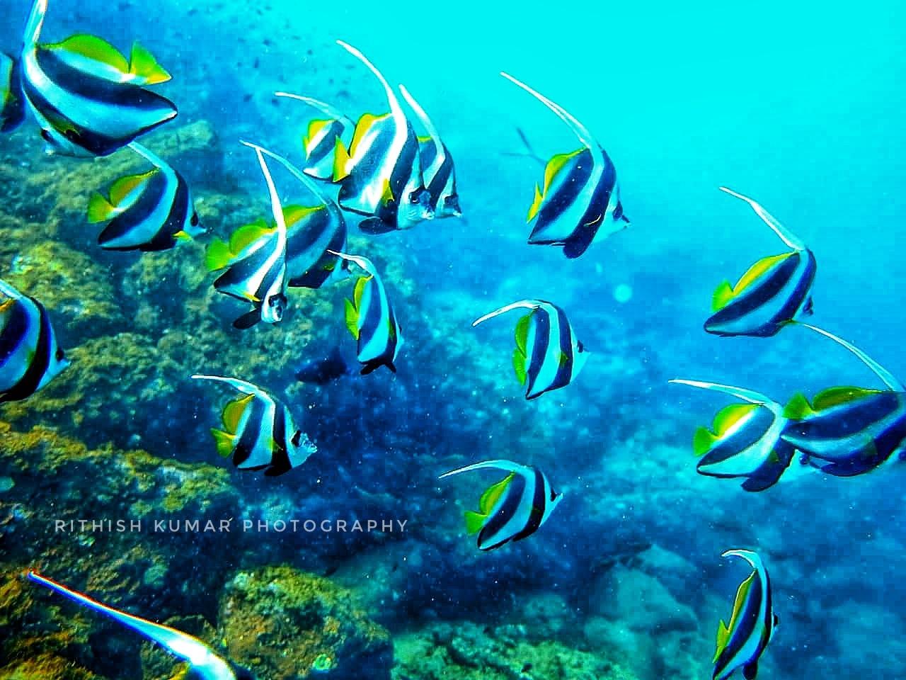 A shot taken during scuba dive! @NetraniIsland  by Rithish Kumar