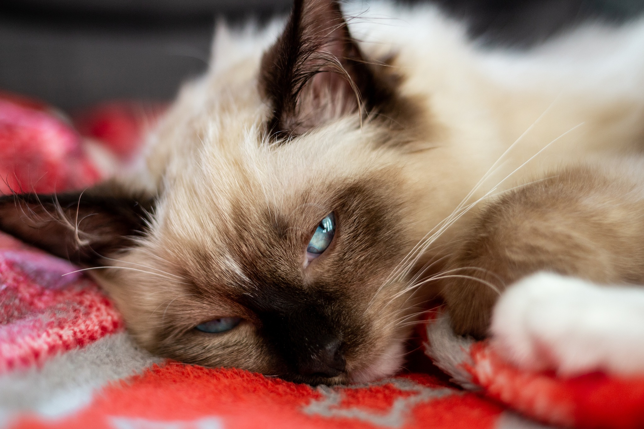 sleepy kitten by nathalie