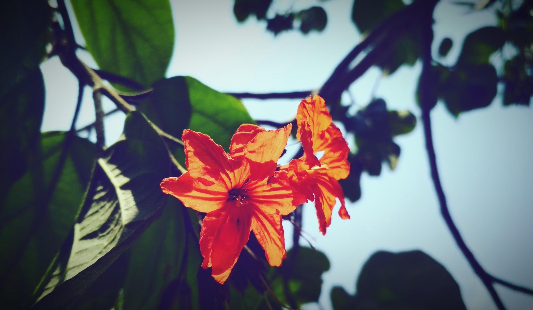 sunshine on flower  by Mahesh