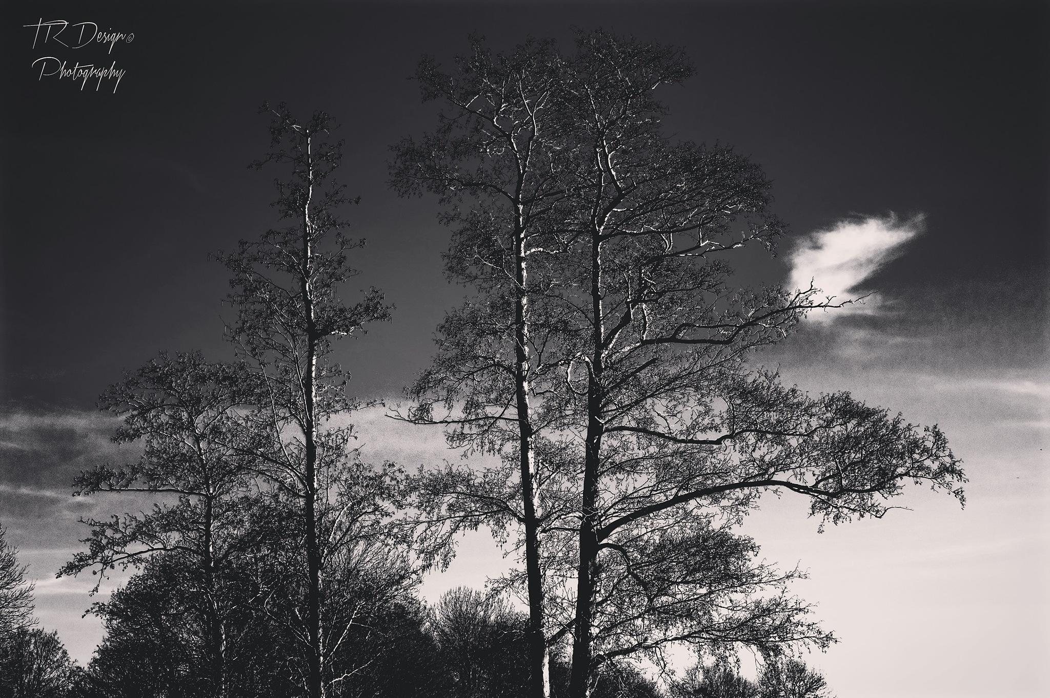 """Black"" Forest by Timo Respondek"