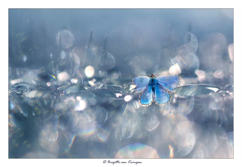Out of the Blue by Brigitte van Krimpen