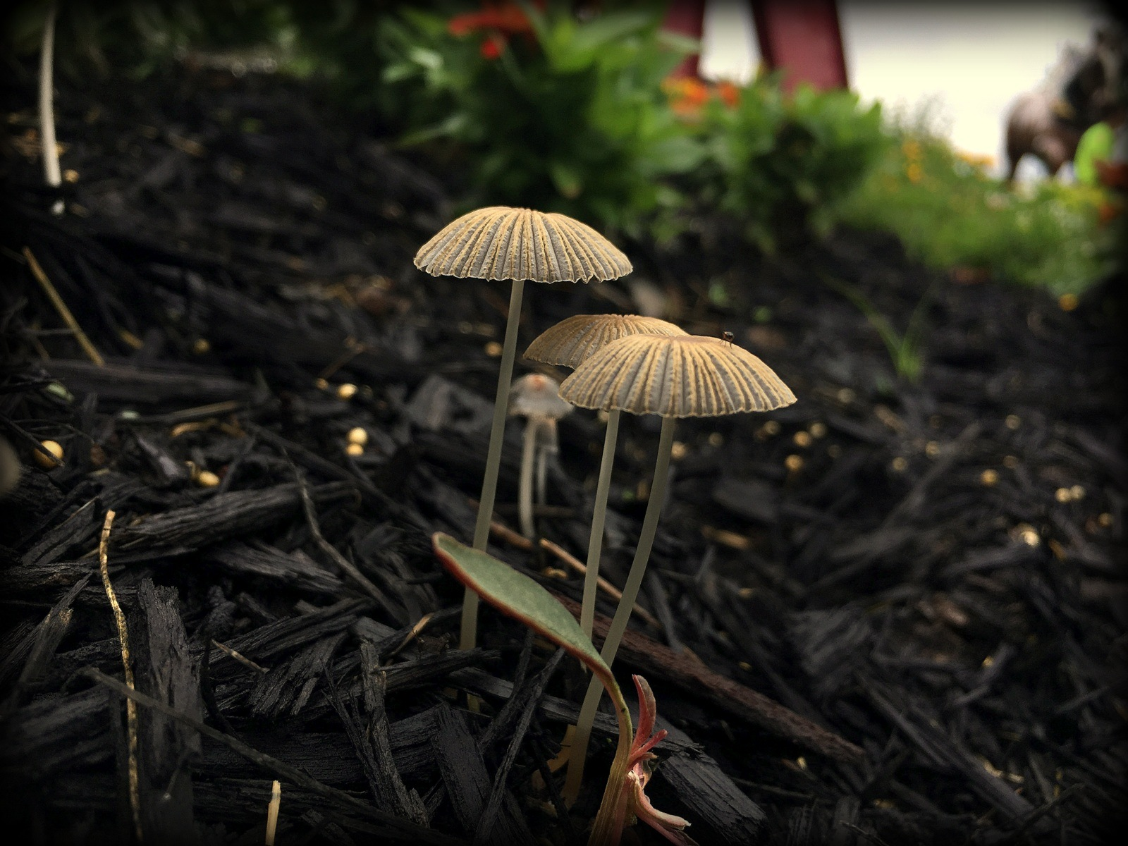 Mushrooms  by Brianna Shoults