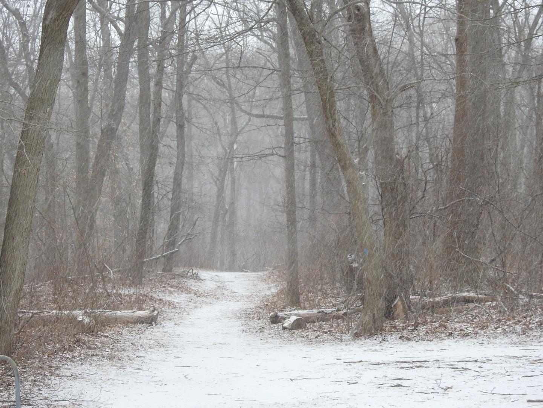 Winter walk  by Laurent