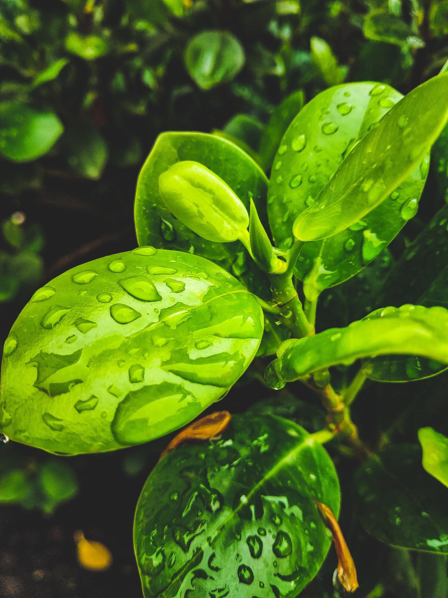 Leaves #2 by Abdul Muiz