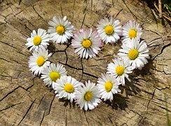 what is true love by kajal hedav