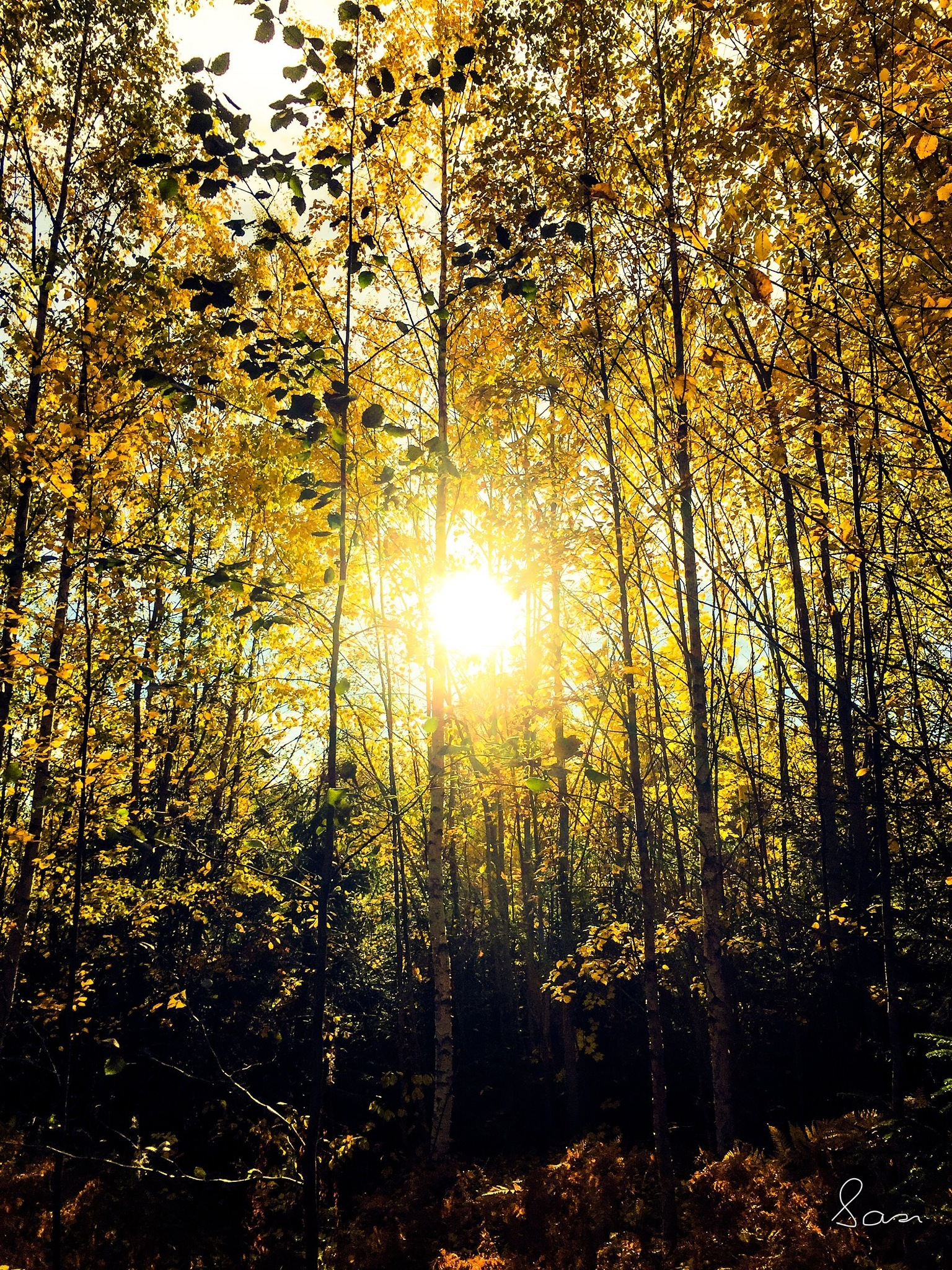 Autumn in the woods✨ by Sarah Grundel