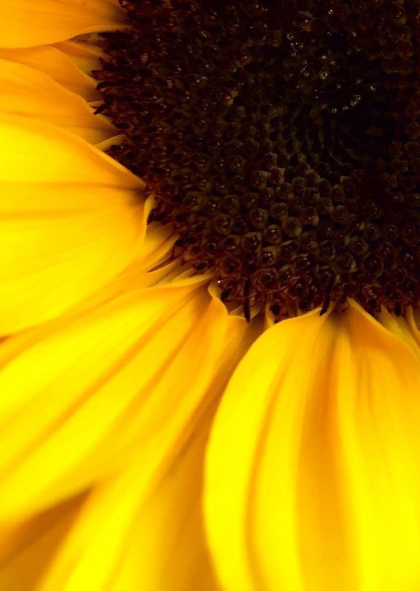 Some sunflower sunshine by Sarah Grundel