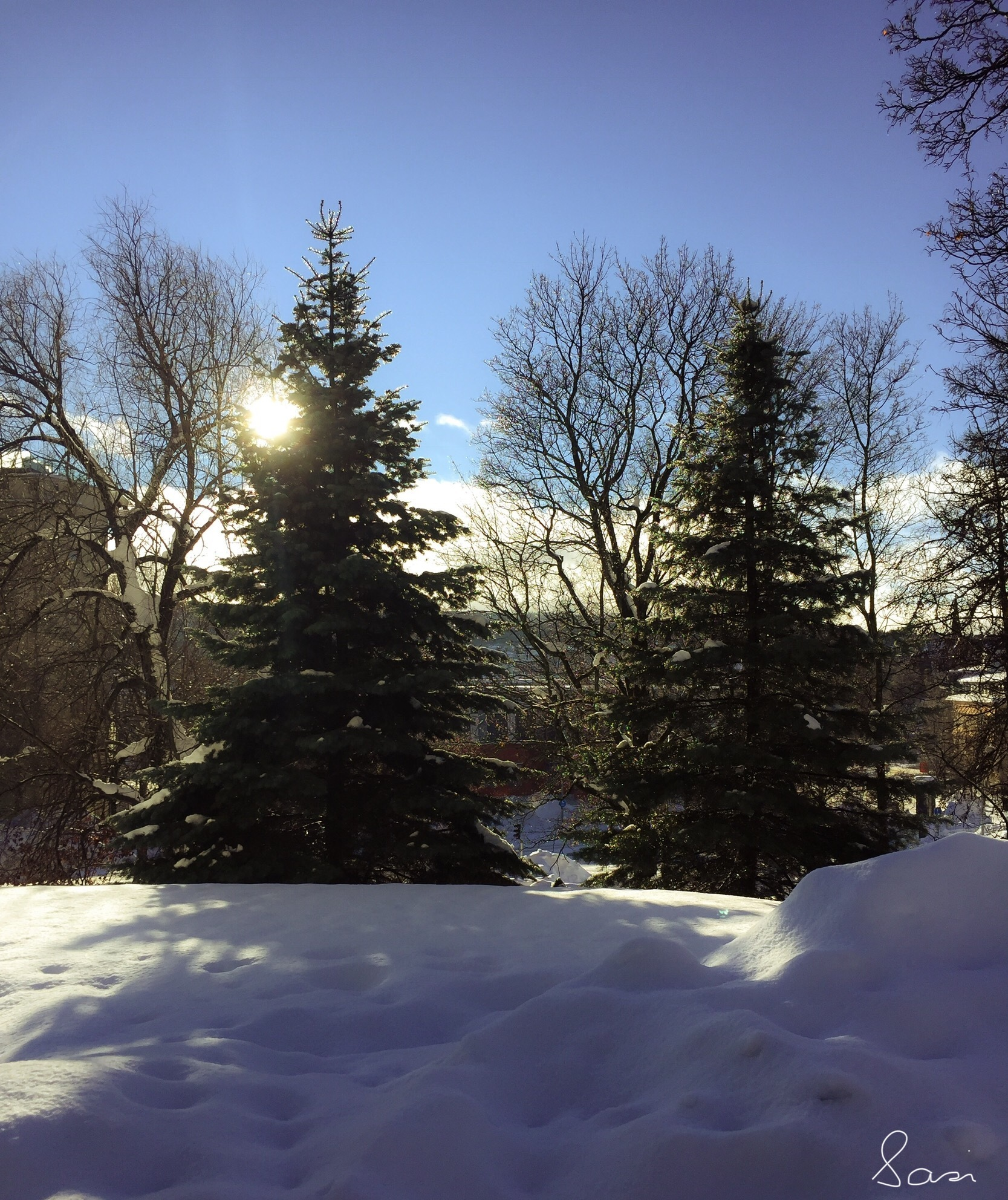 Photo in Nature #winter #snow #ice #cold #trees #sun #beautiful