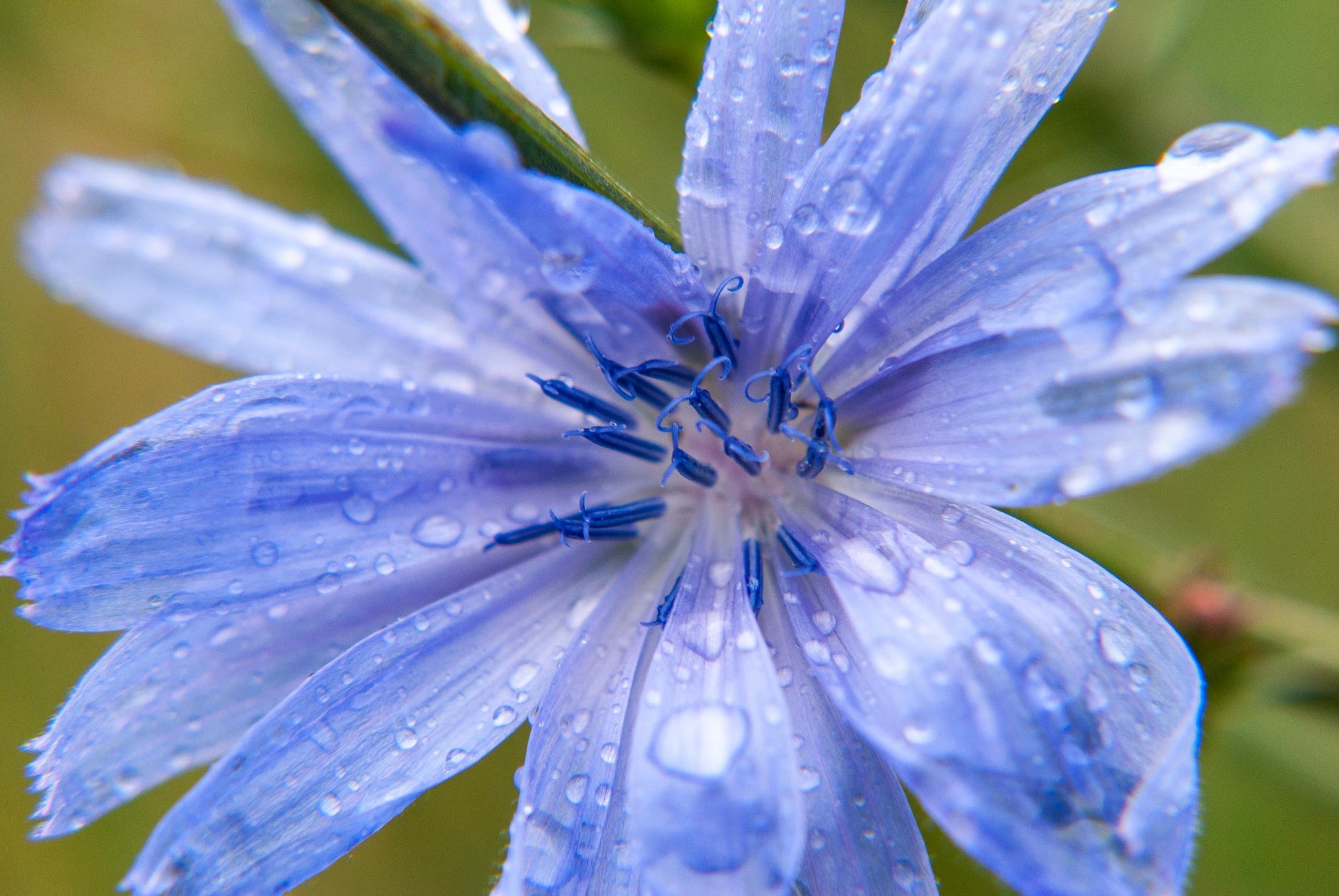 Purple Rain by Belinda Long
