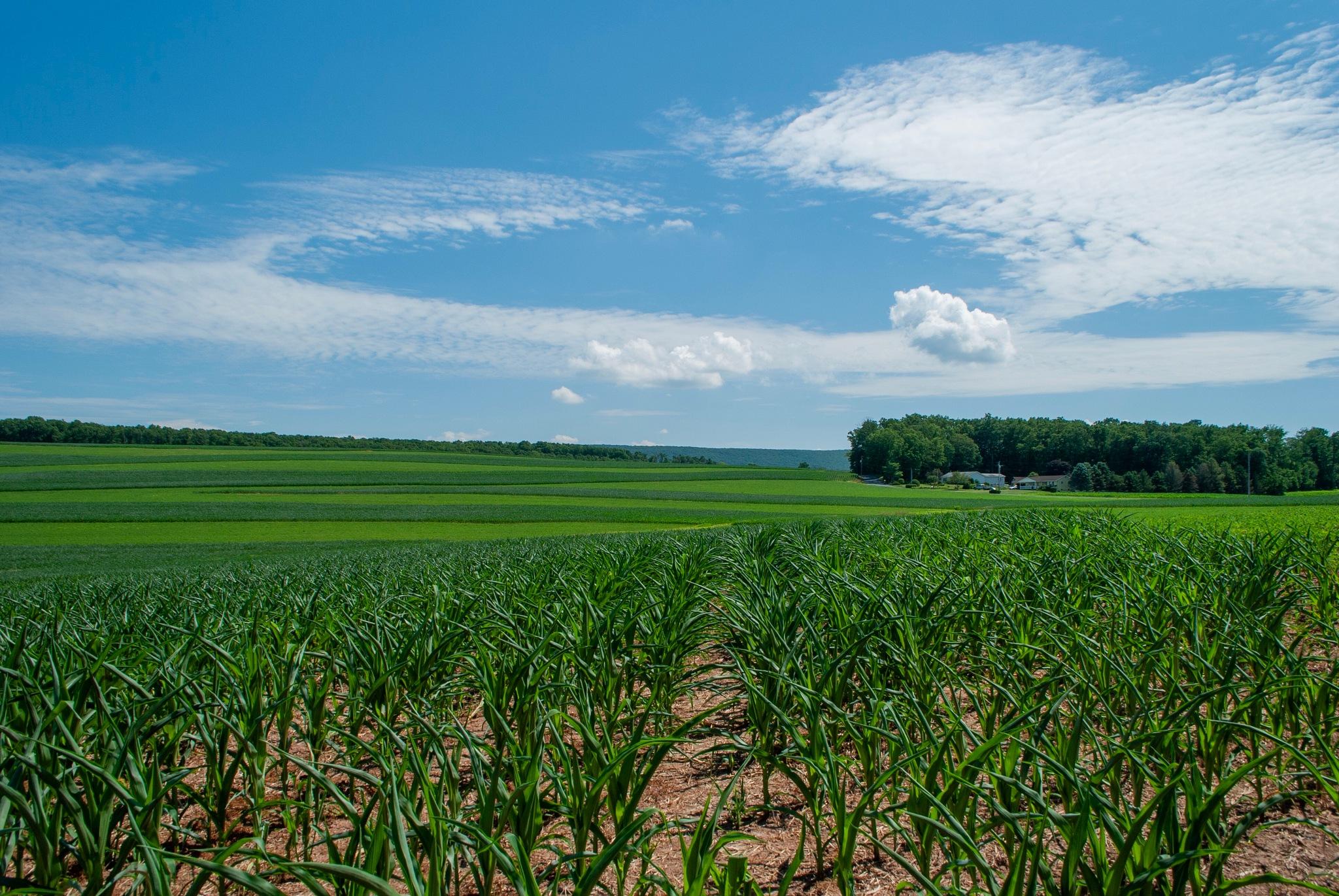 Farmin' Fields by Belinda Long