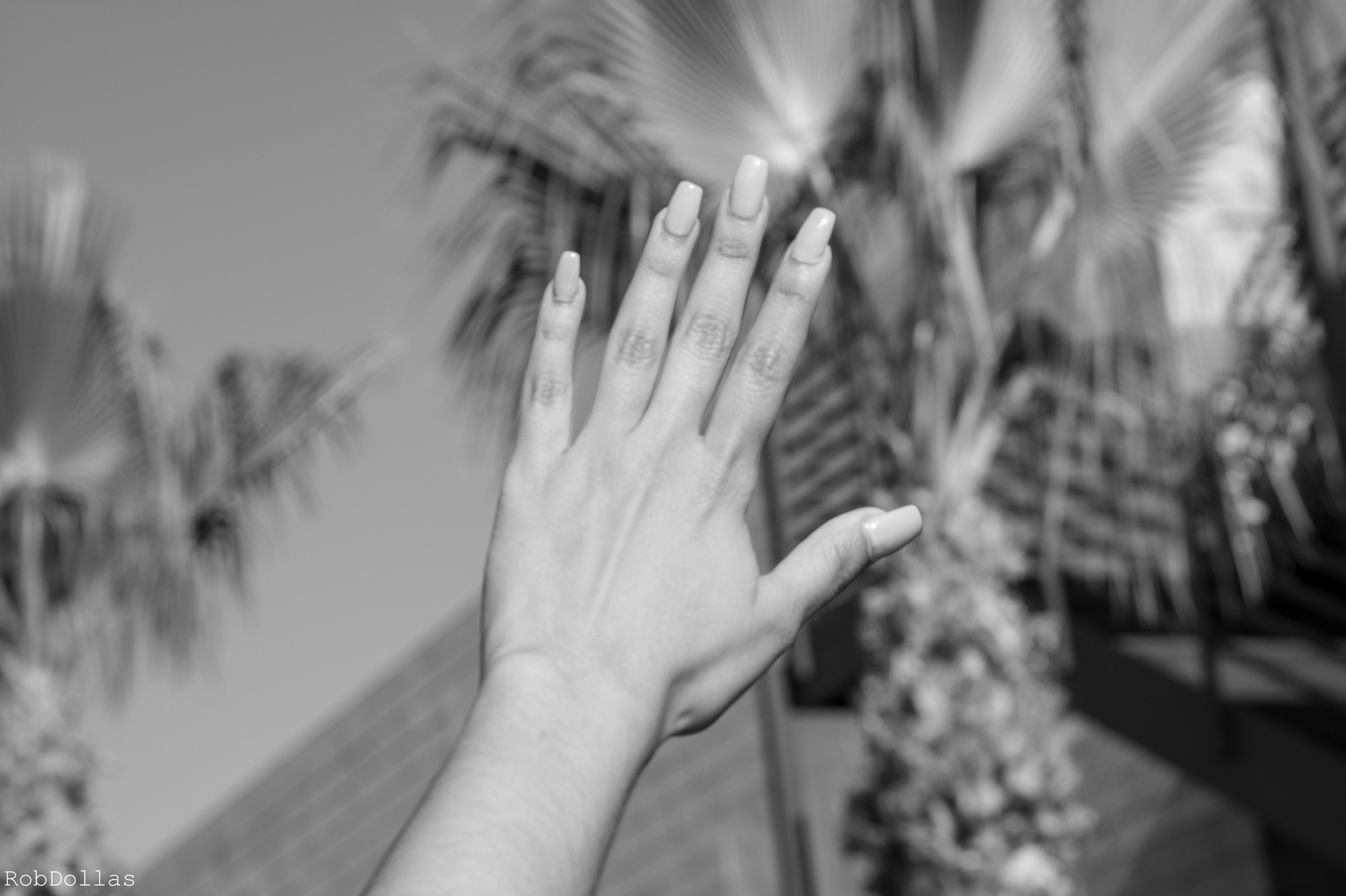 Palm Tree Nails by Rob Dollas