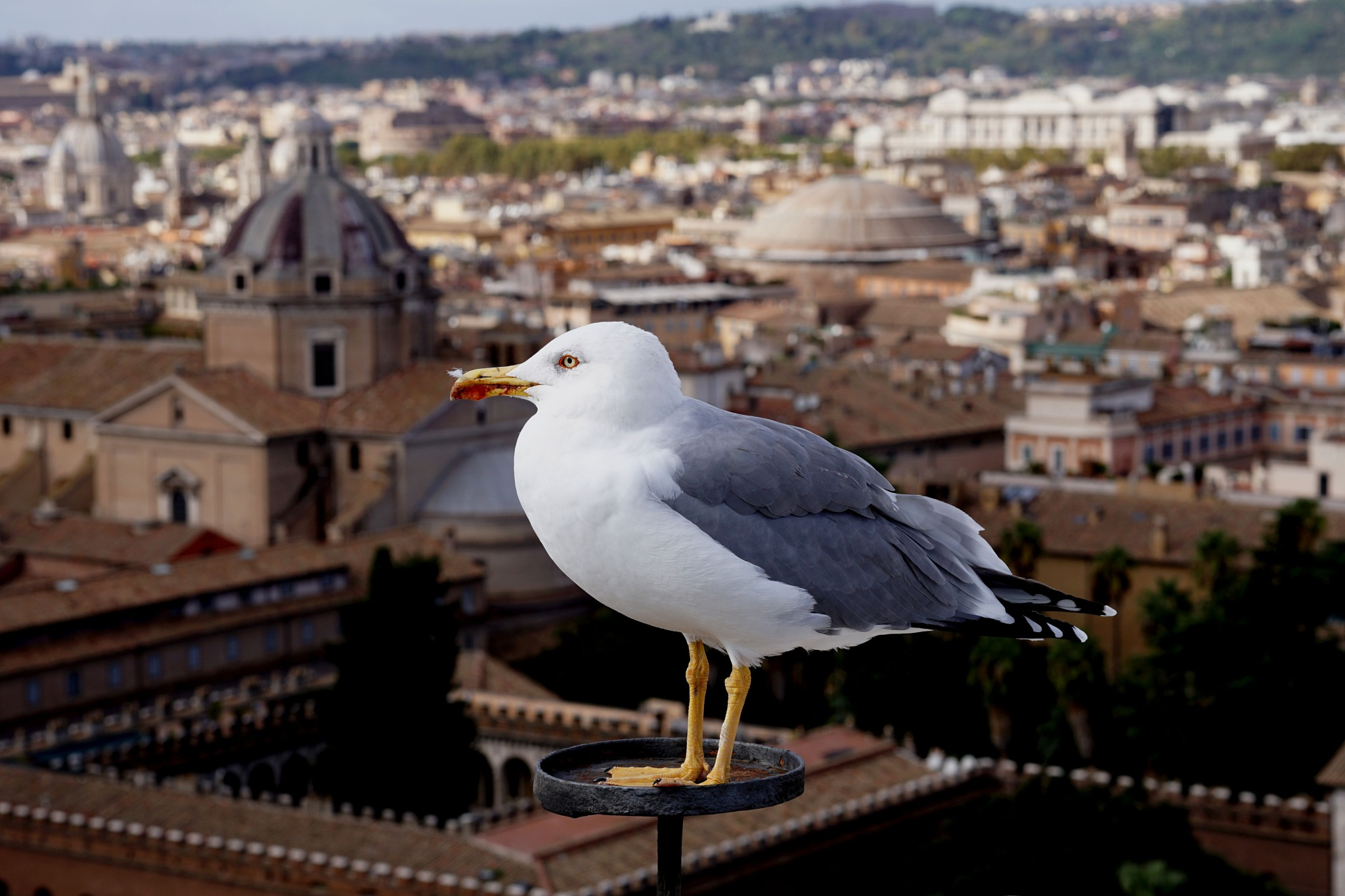 Bird's eye view of Rome by John Semple