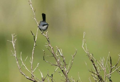 Birds by  Carlos Dietz Ph