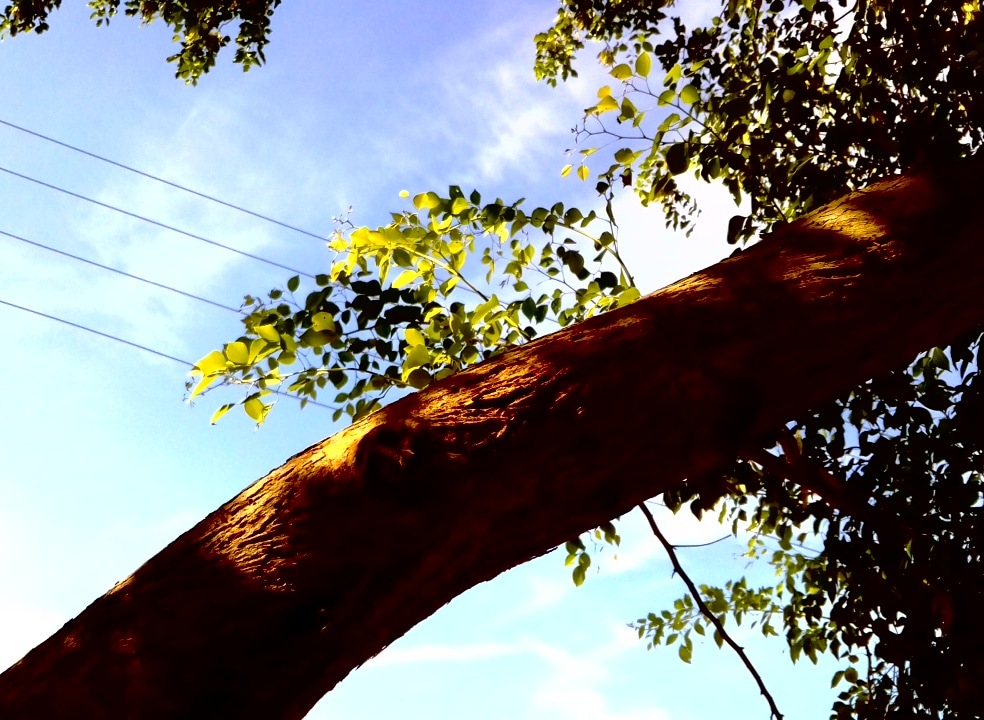 Branch Of Life  by Dova