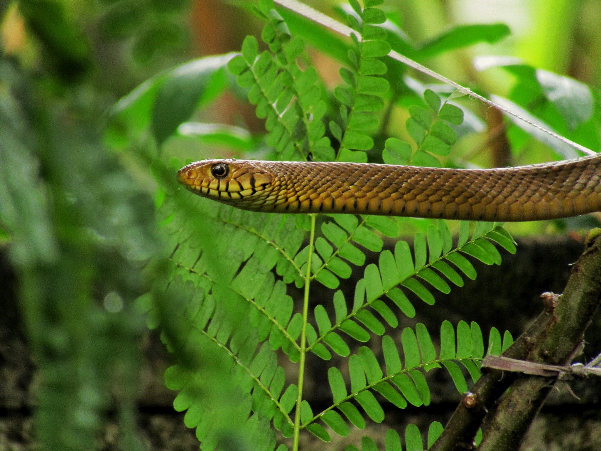 Snake by AthulSatheesh