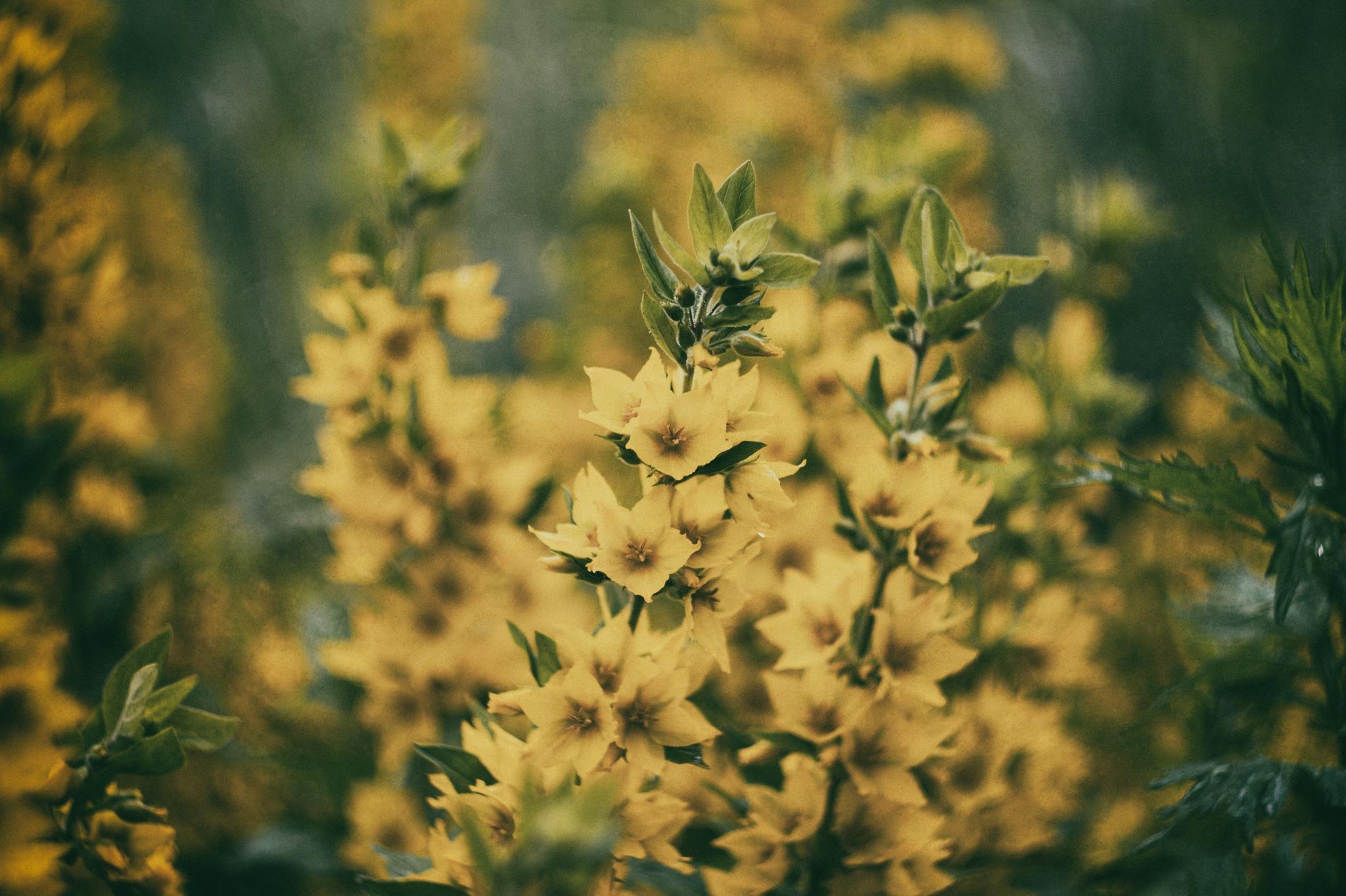 Moody flowers by Edgar Cherkasov