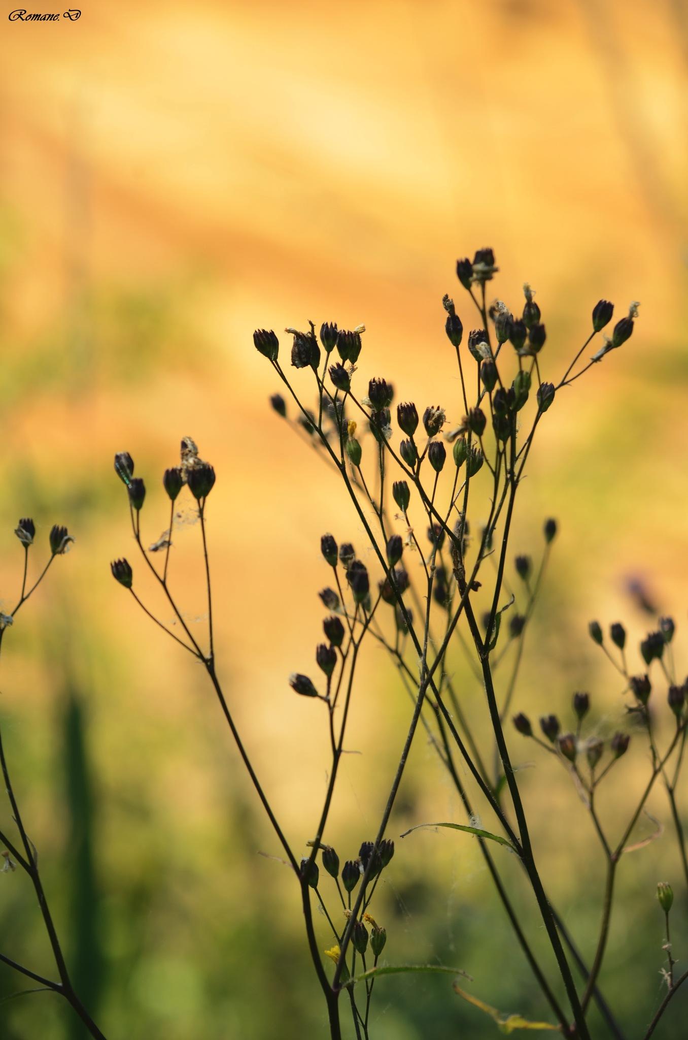 Flowers by Romane Delcoeur