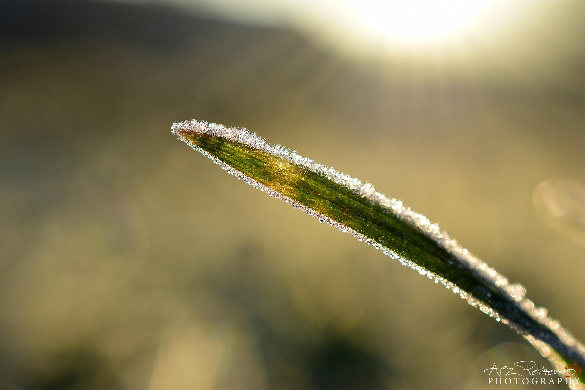 Locked in ice by Aliz Petrenkó