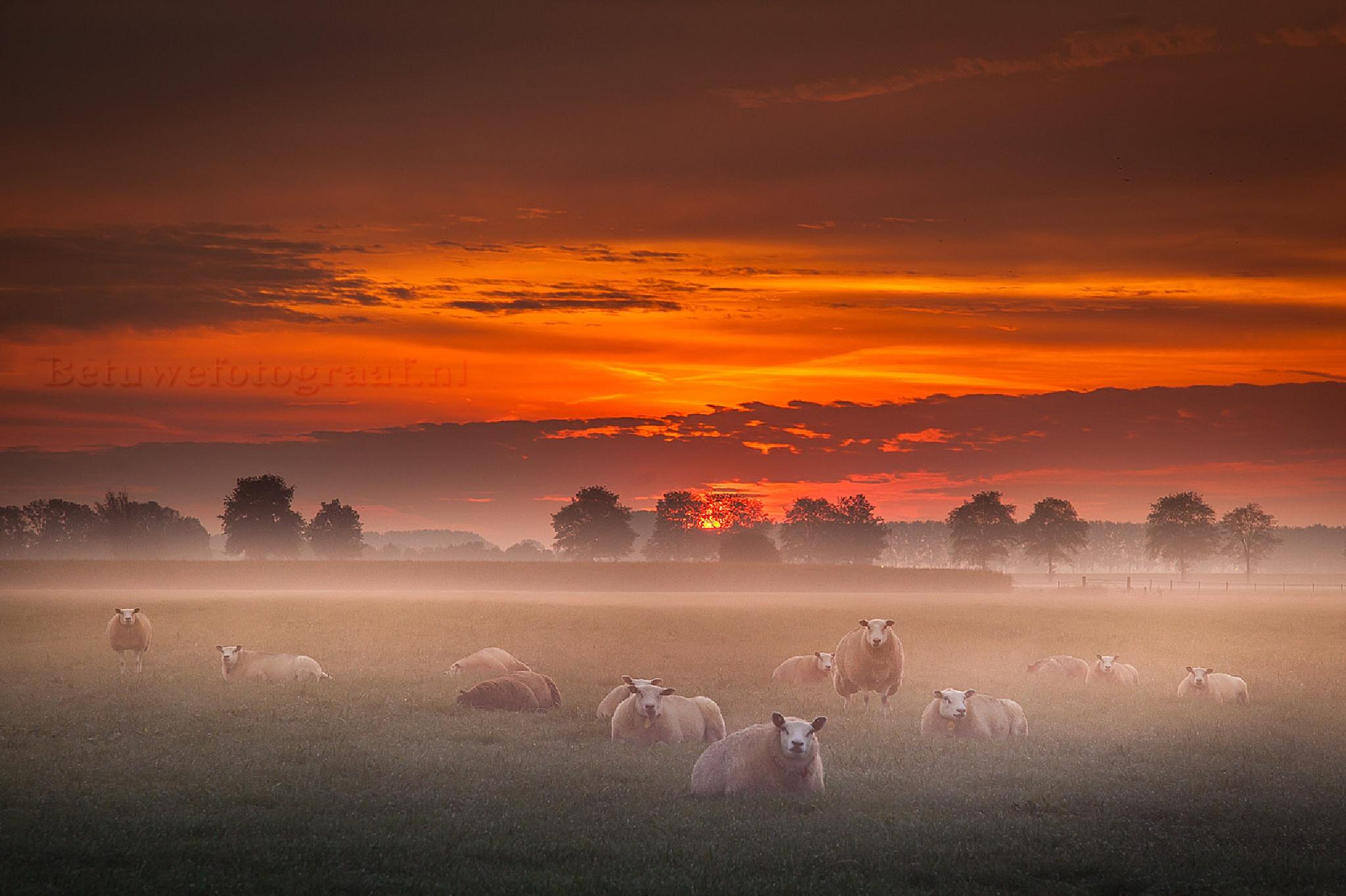 Goodmorning the World...... by Betuwefotograaf