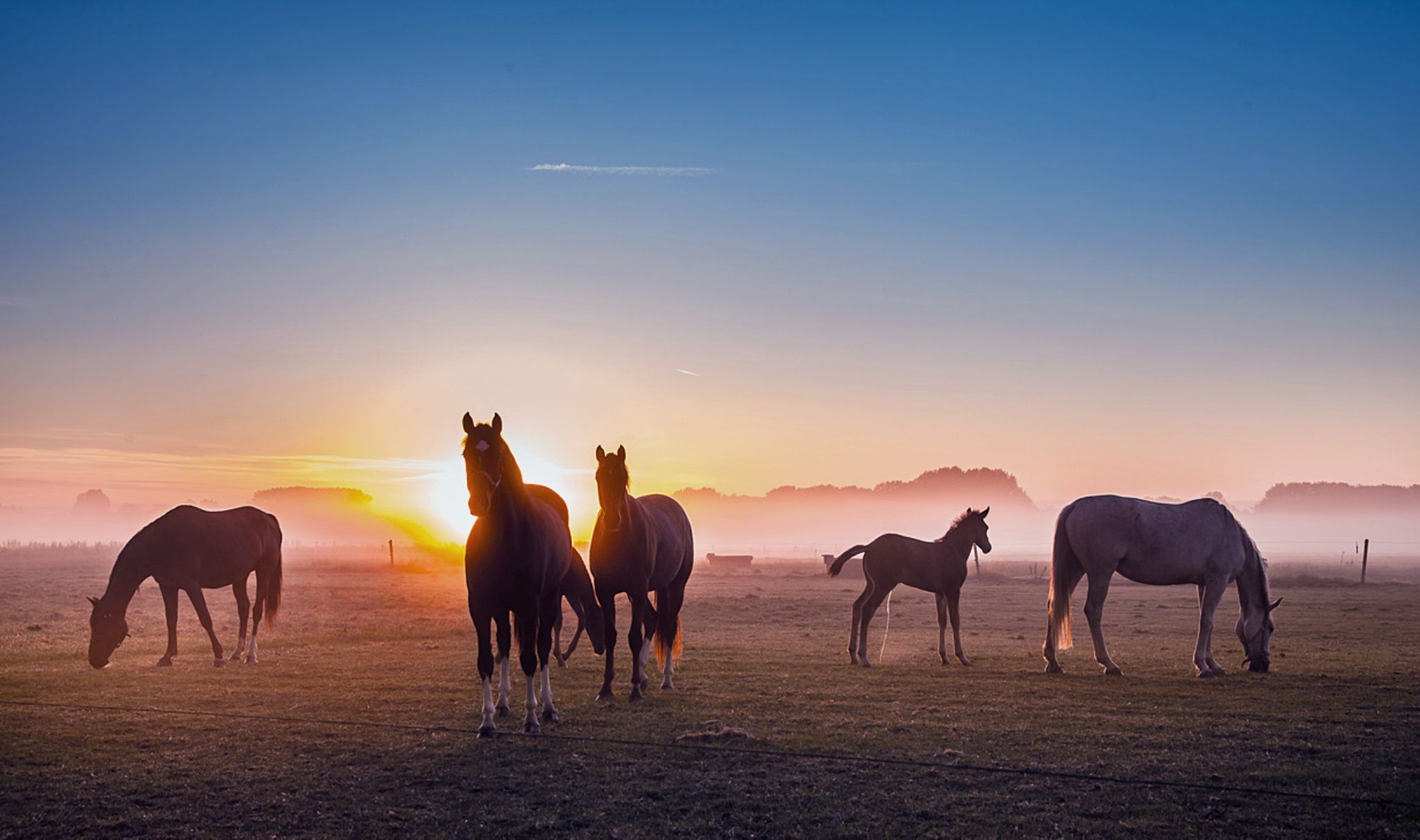 Horses today at a foggy sunrise..... by Betuwefotograaf