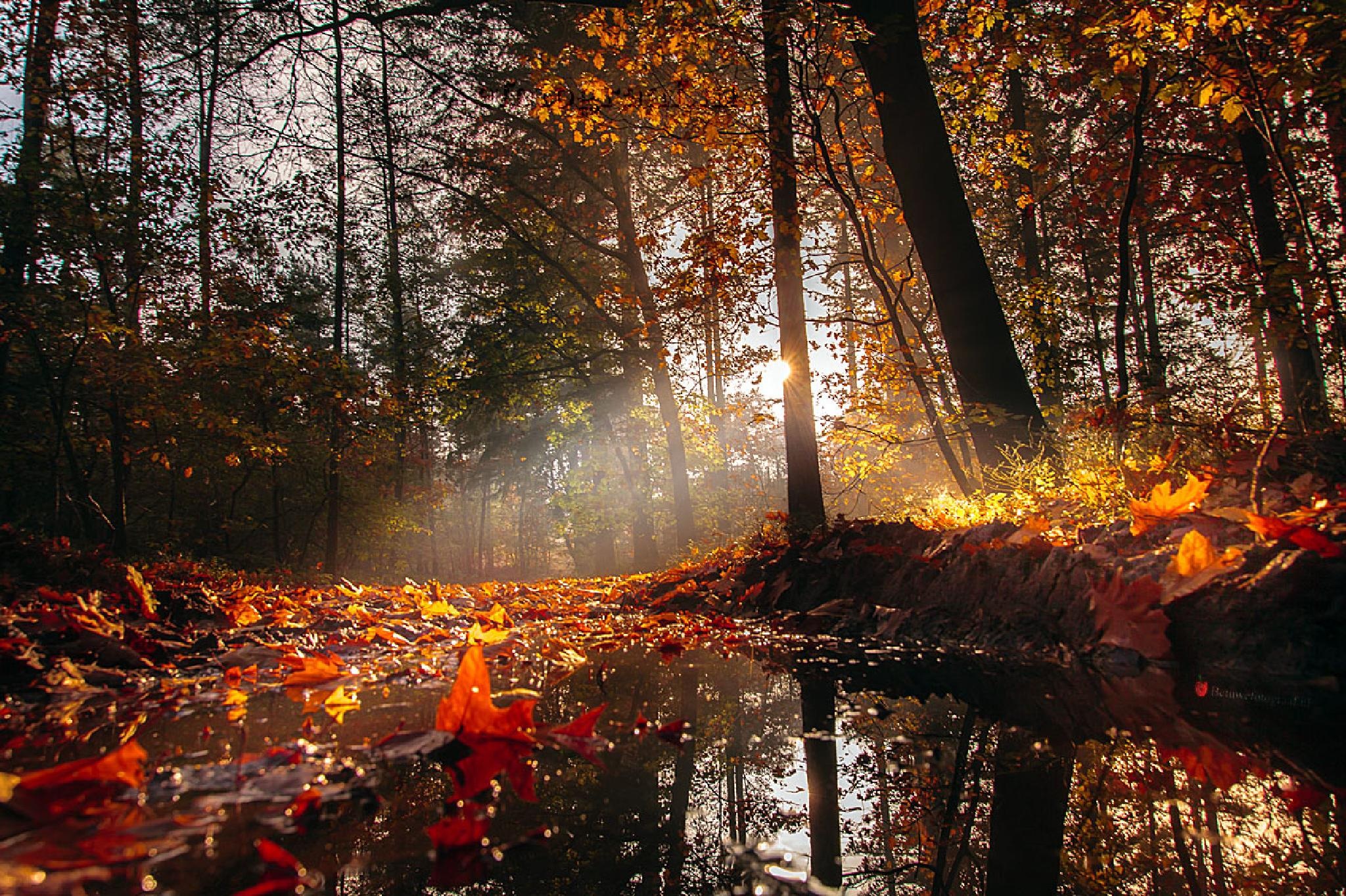 The colors of Autumn....... by Betuwefotograaf
