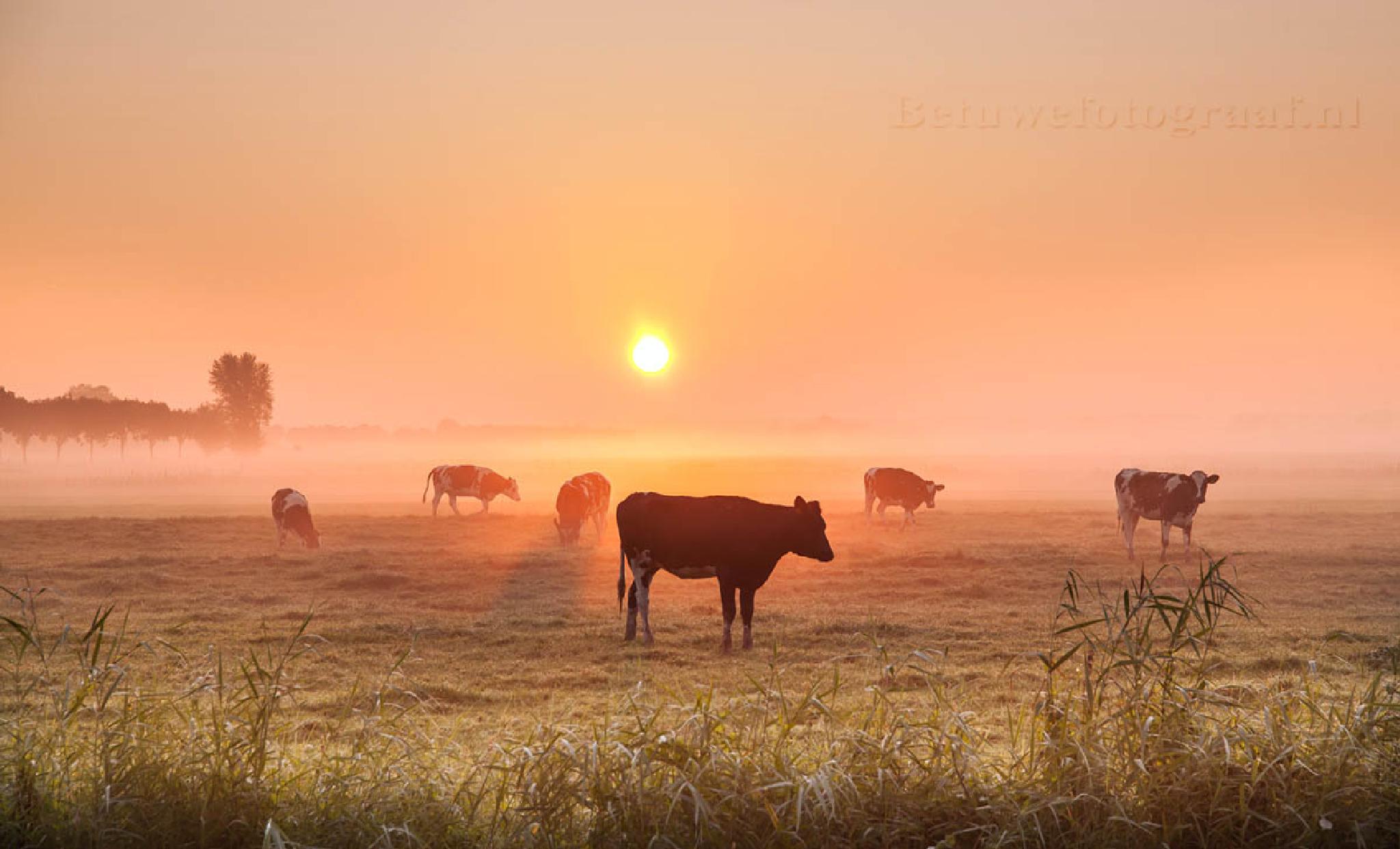 It was a foggy morning........ by Betuwefotograaf