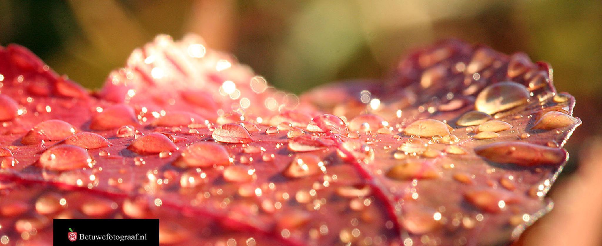 Pearls of Autumn........ by Betuwefotograaf