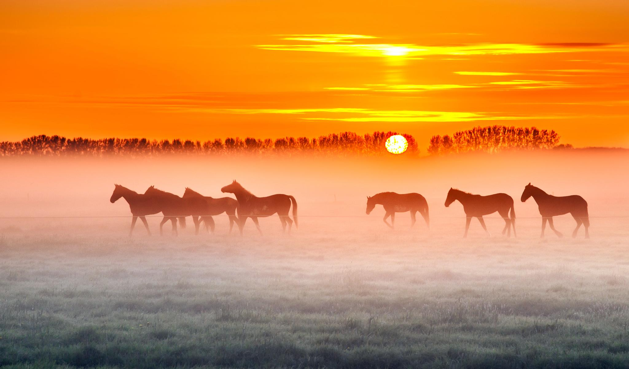 Photo in Nature #holland #horses #sunrise #fog #mist