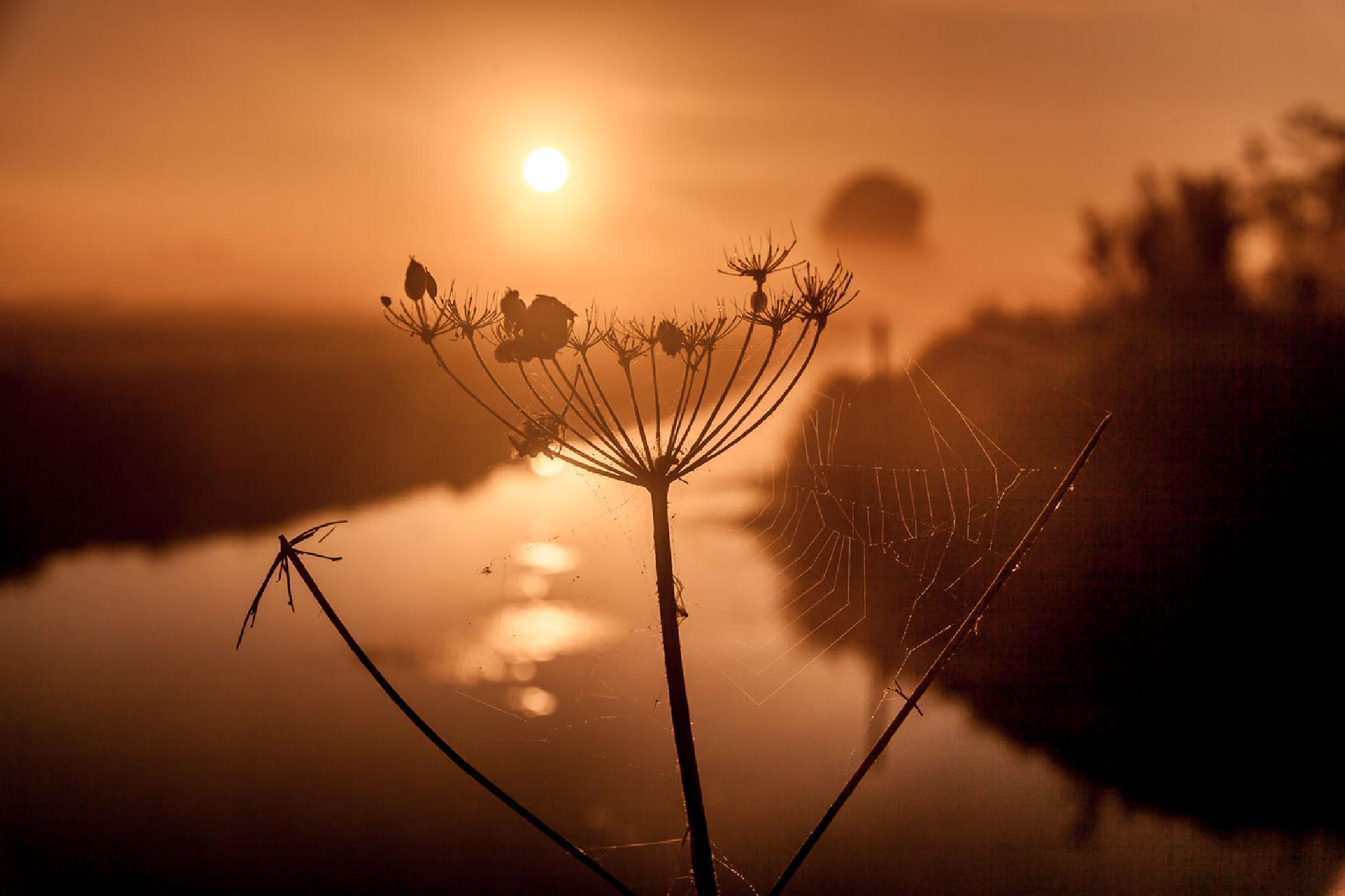 Dutch scenery........... by Betuwefotograaf