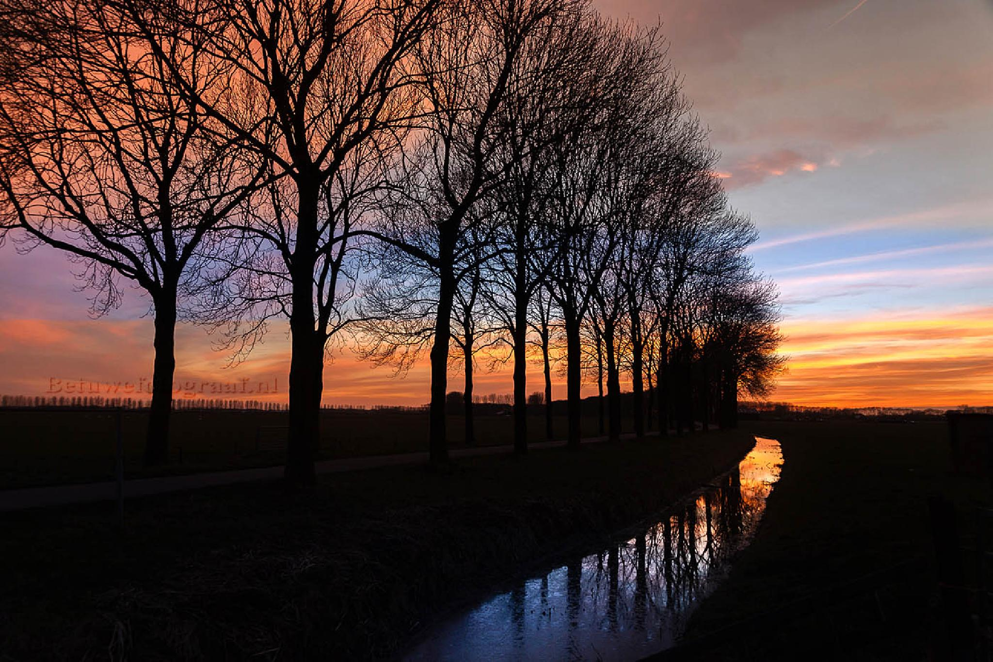 Photo in Nature #dutch #holland #betuwe #trees #sunset