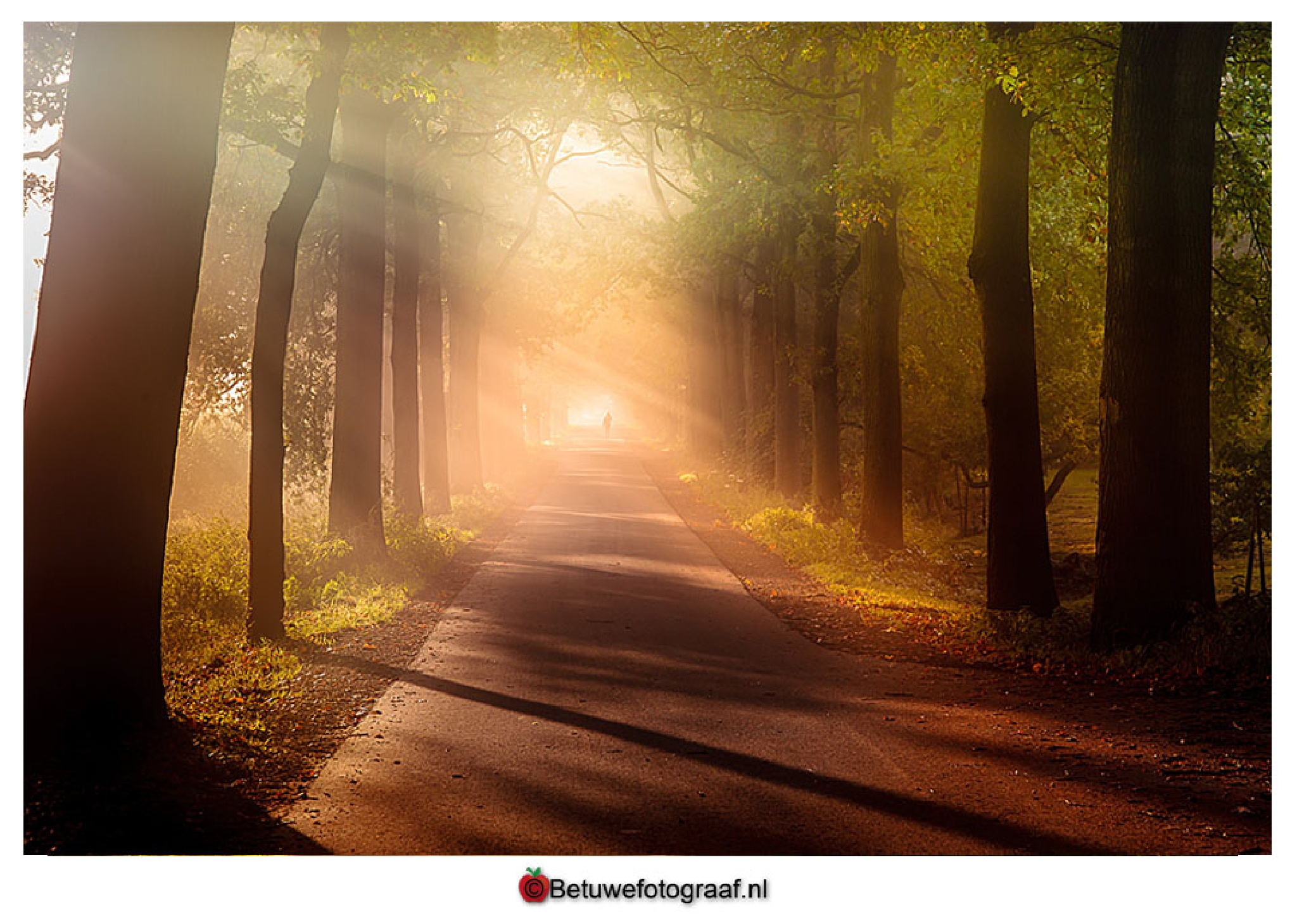 Autumn begins about 10.21 hours today..... by Betuwefotograaf